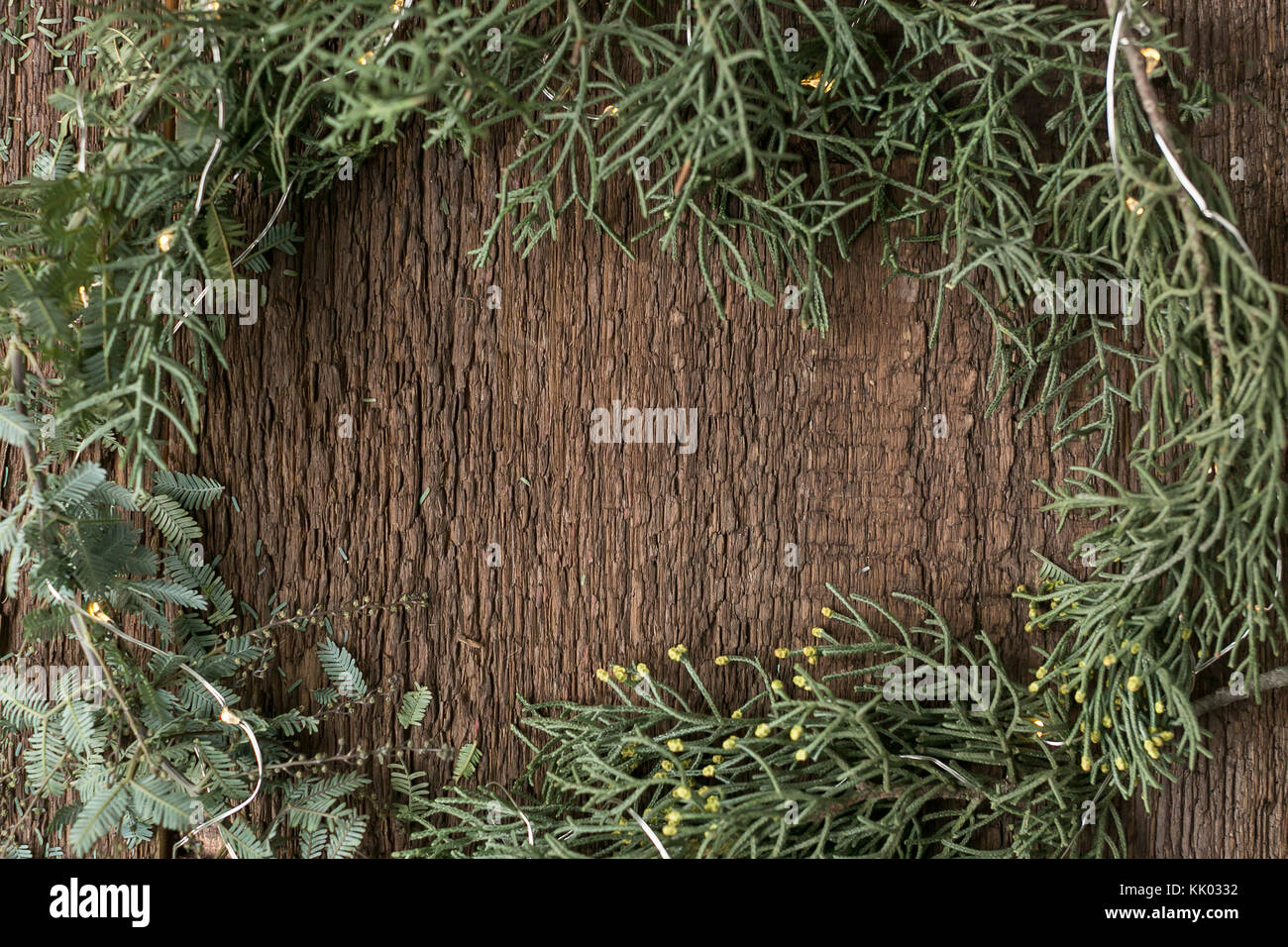 planting, nature, growing concept. there is free space for text in the frame made of various kinds of fresh conifer - Stock Image