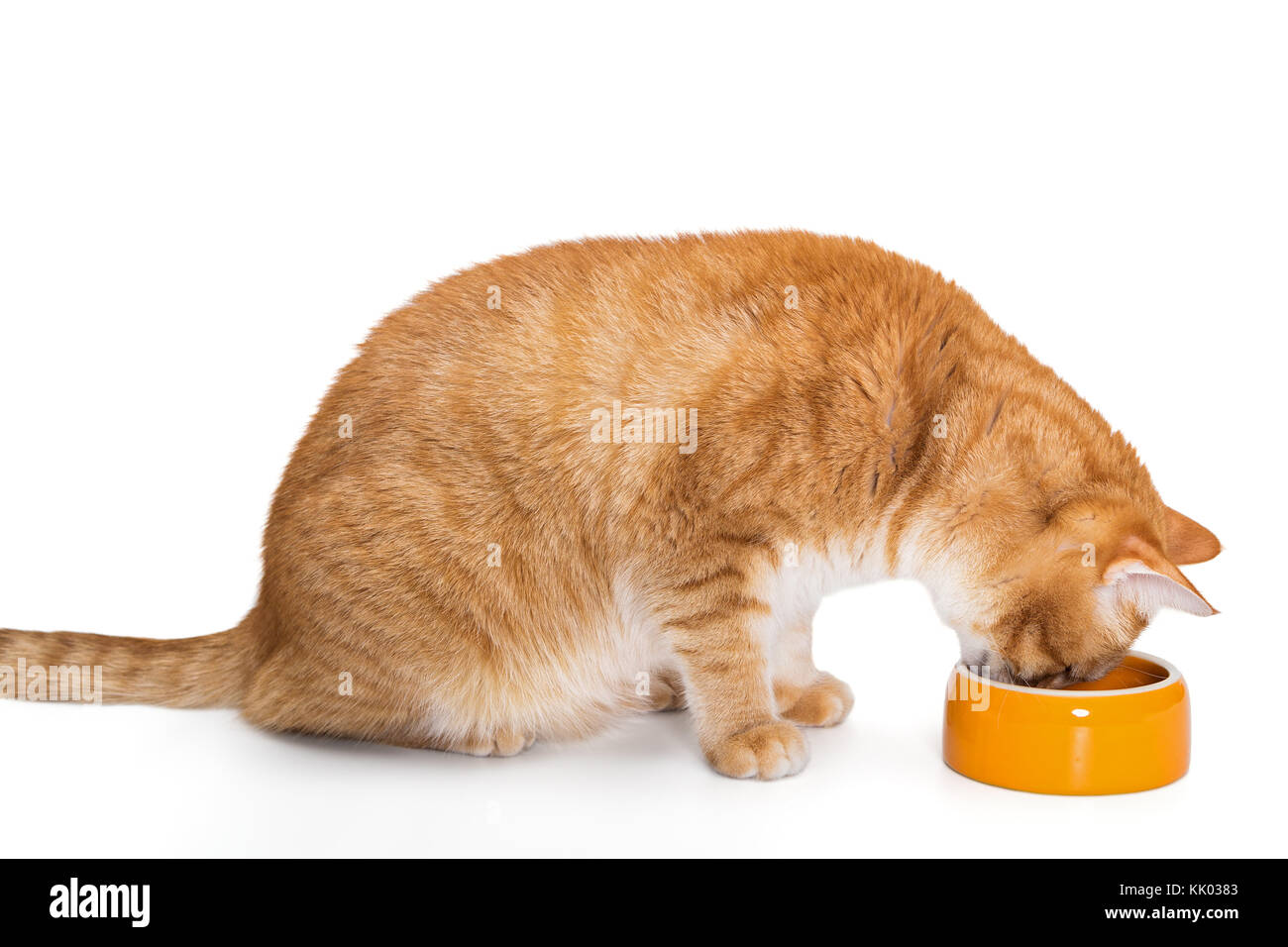 how to get kitten to eat dry food