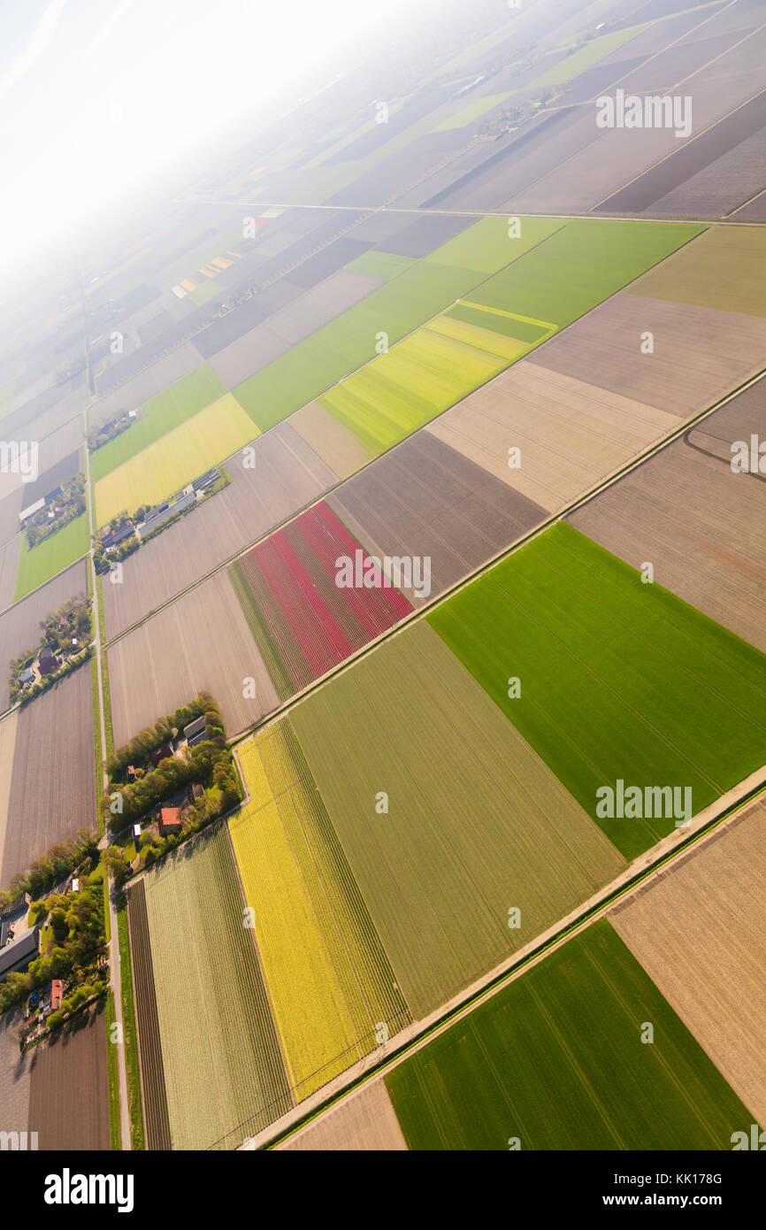Aerial view of the tulip fields in North Holland , The Netherlands Stock Photo