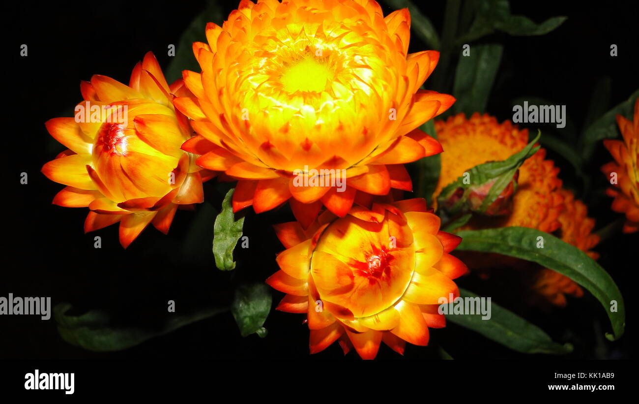 Glowing Flowers - Stock Image