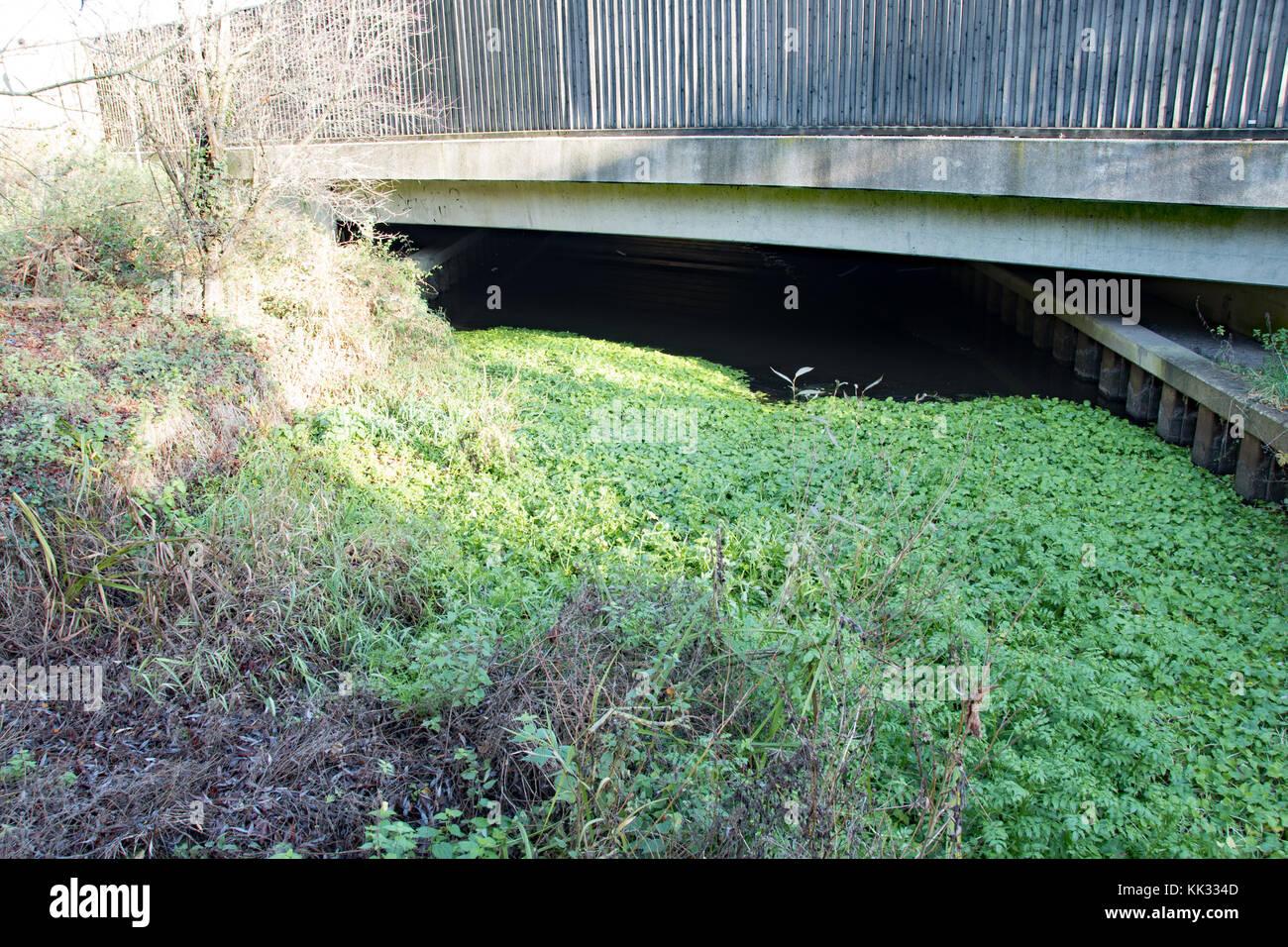 Colne Brook feeds through tunnel under the London M25 orbital motorway - Stock Image
