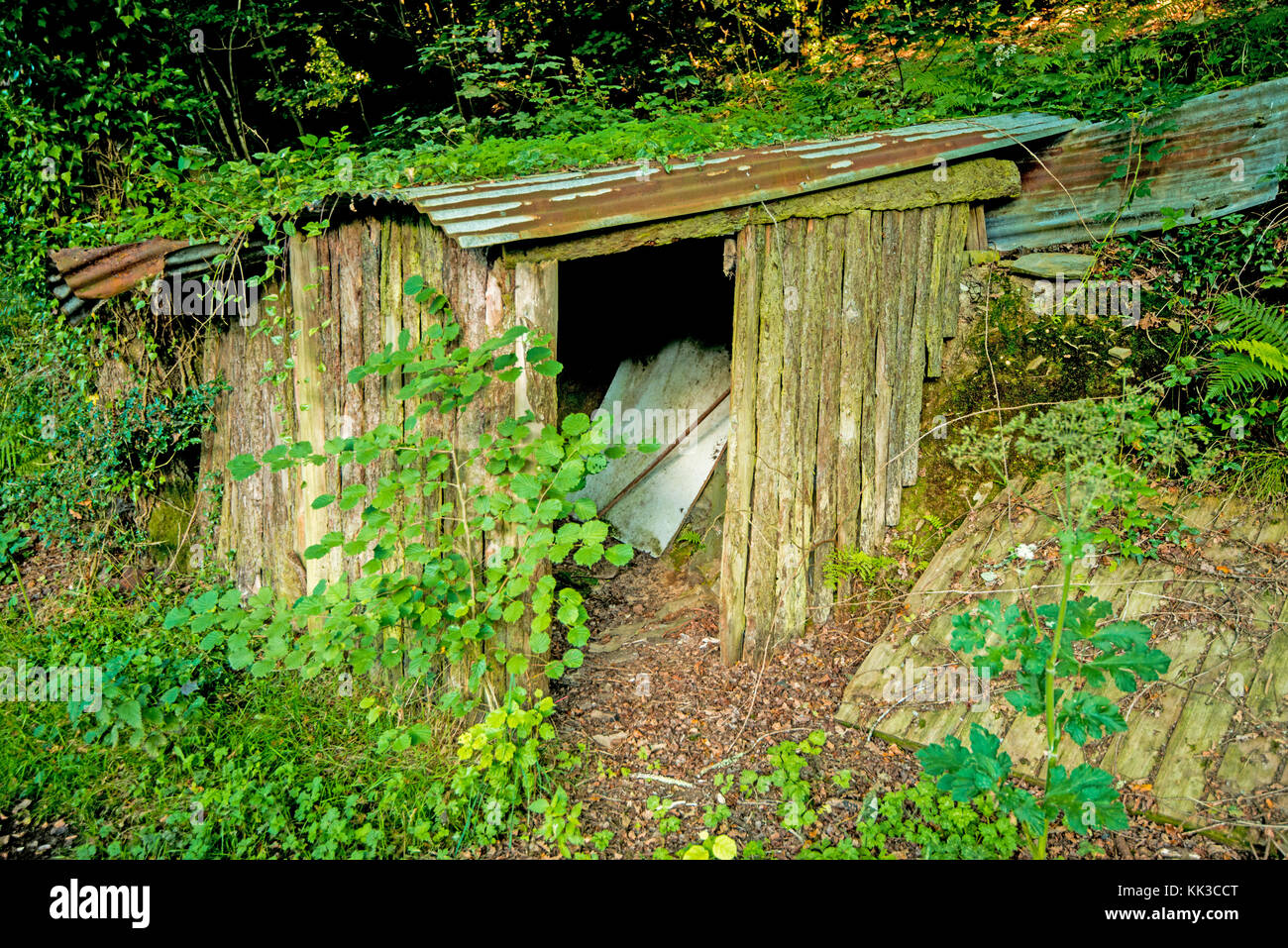 This old shed in the woods of Devon barely retains its primary function. It is leaning, falling, but still has an - Stock Image