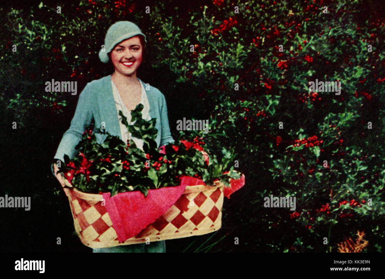 1937 -  Holly growing for the Christmas Trade at Gig Harbour nurseries USA - a vintage color photograph - Stock Image