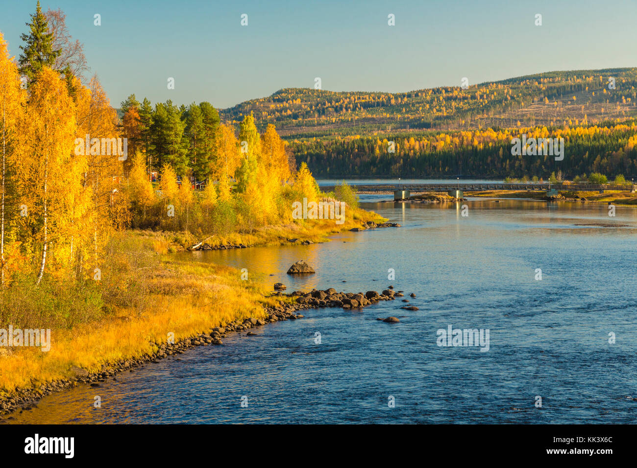 View over Storforsen with yellow birch trees, bridge crossing the river, Storforsen, Älvsbyn county, Norrbotten, - Stock Image