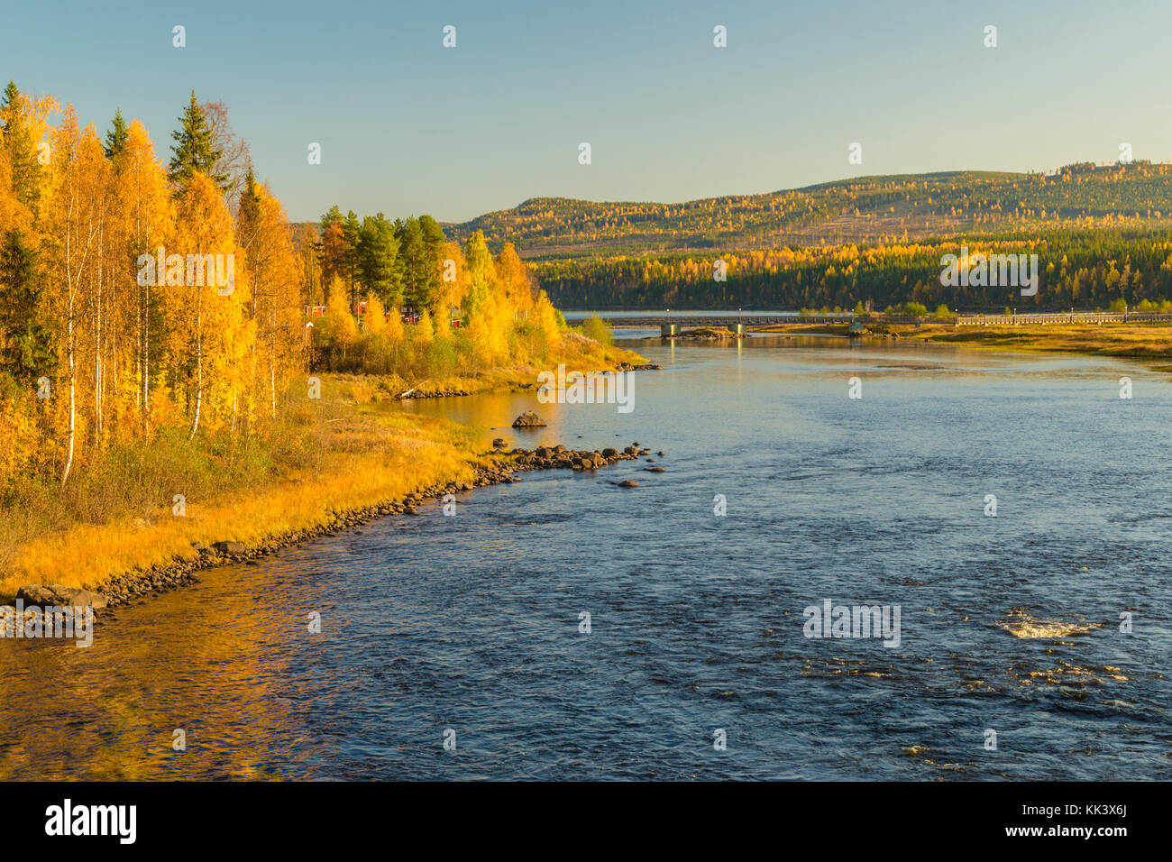 View over Storforsen with yellow birch trees, bridge crossing the river, Storforsen, Älvsbyn county, Norrbotten - Stock Image