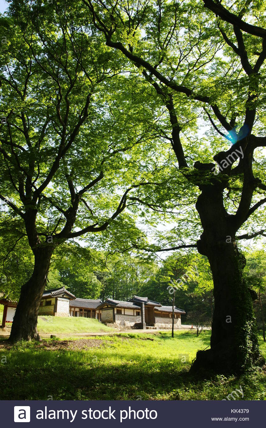Korean history Royal Tombs of the Joseon Dynasty King Injo zelkova tree beside the house for ancestral rites - Stock Image
