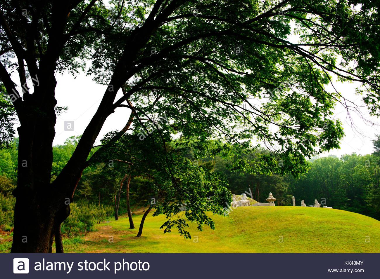 Korean history Royal Tombs of the Joseon Dynasty King Sukjong Queen Ingyeong zelkova tree - Stock Image