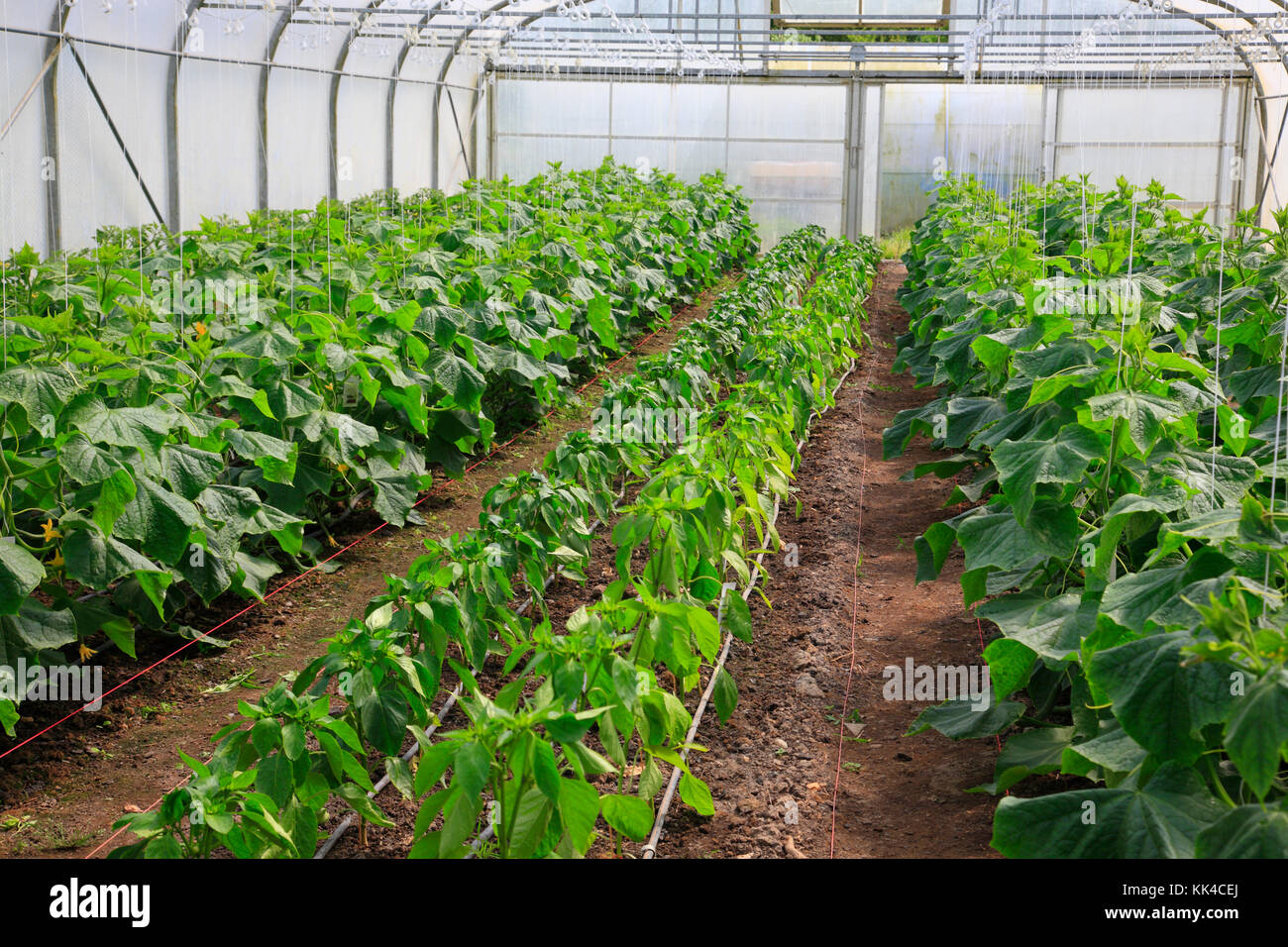Green house, Ecovillage Sieben Linden near Beetzendorf / Salzwedel, Saxony-Anhalt, Germany, Europe - Stock Image