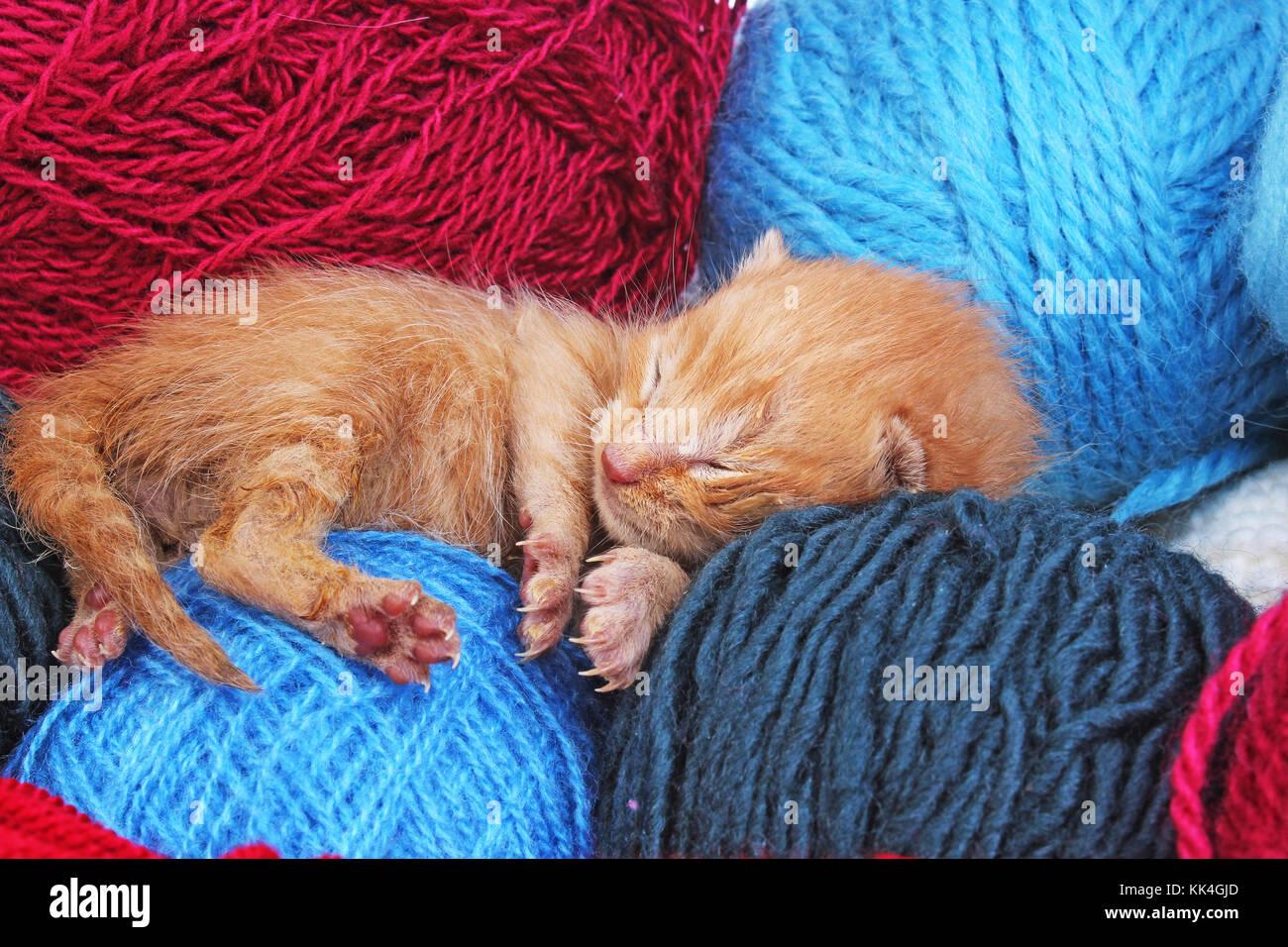 New Born Baby Cat Sleeping Cute Beautiful Little Few Days Old Orange Stock Photo Alamy