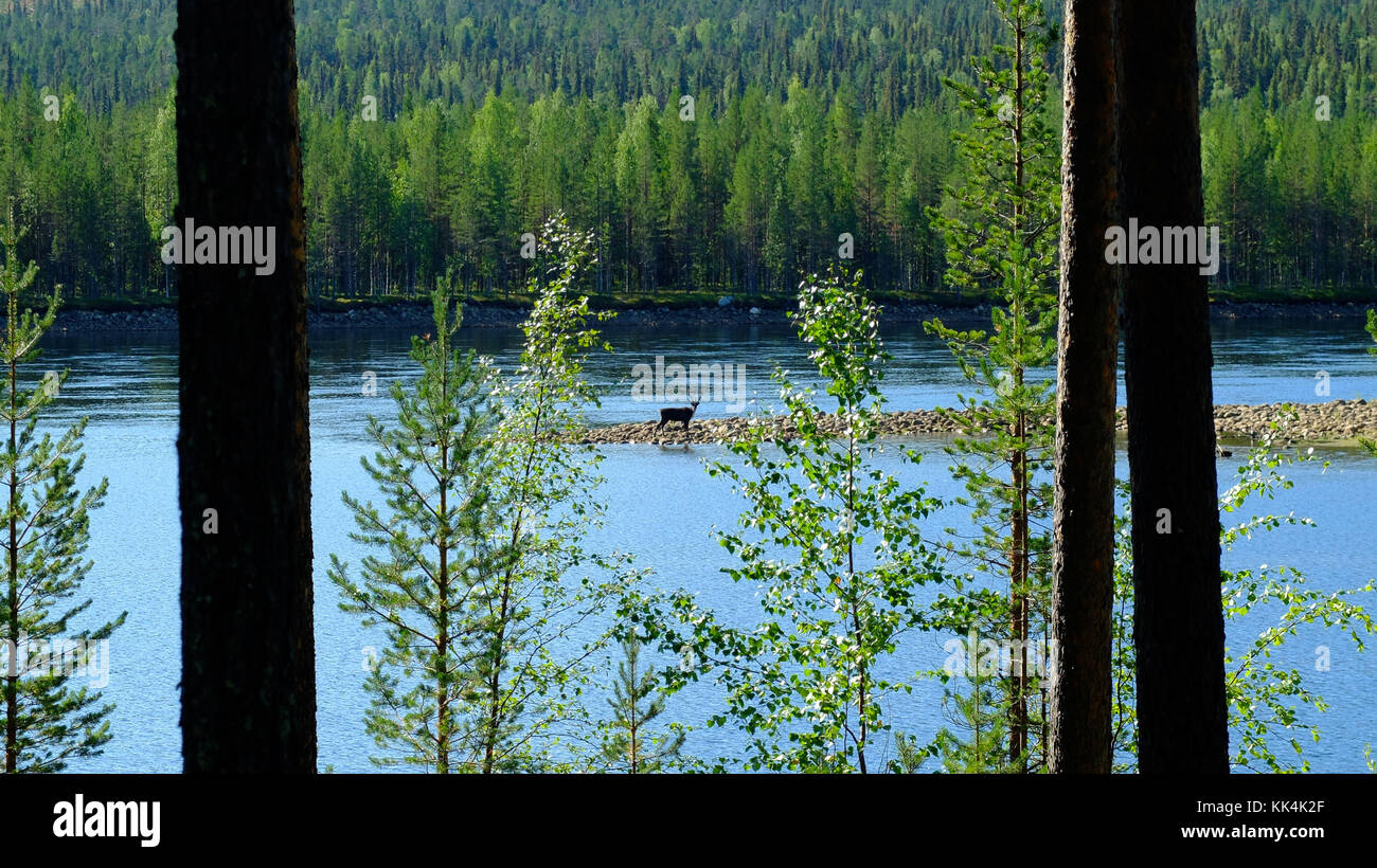 Sweden, Swedish Lapland. 2014/08/08. Muddus National Park, situated in the town of Jokkmokk and Gallivare, Norrbotten - Stock Image