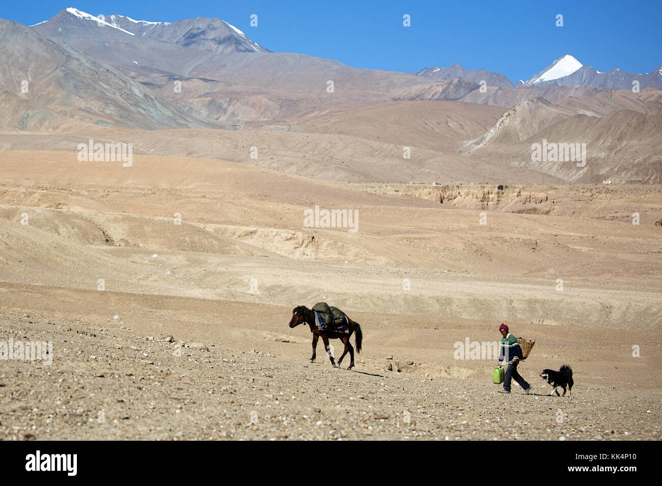 Local man with a dog and a mule - traditional way of transport, Ladakh, Jammu and Kashmir, India. - Stock Image