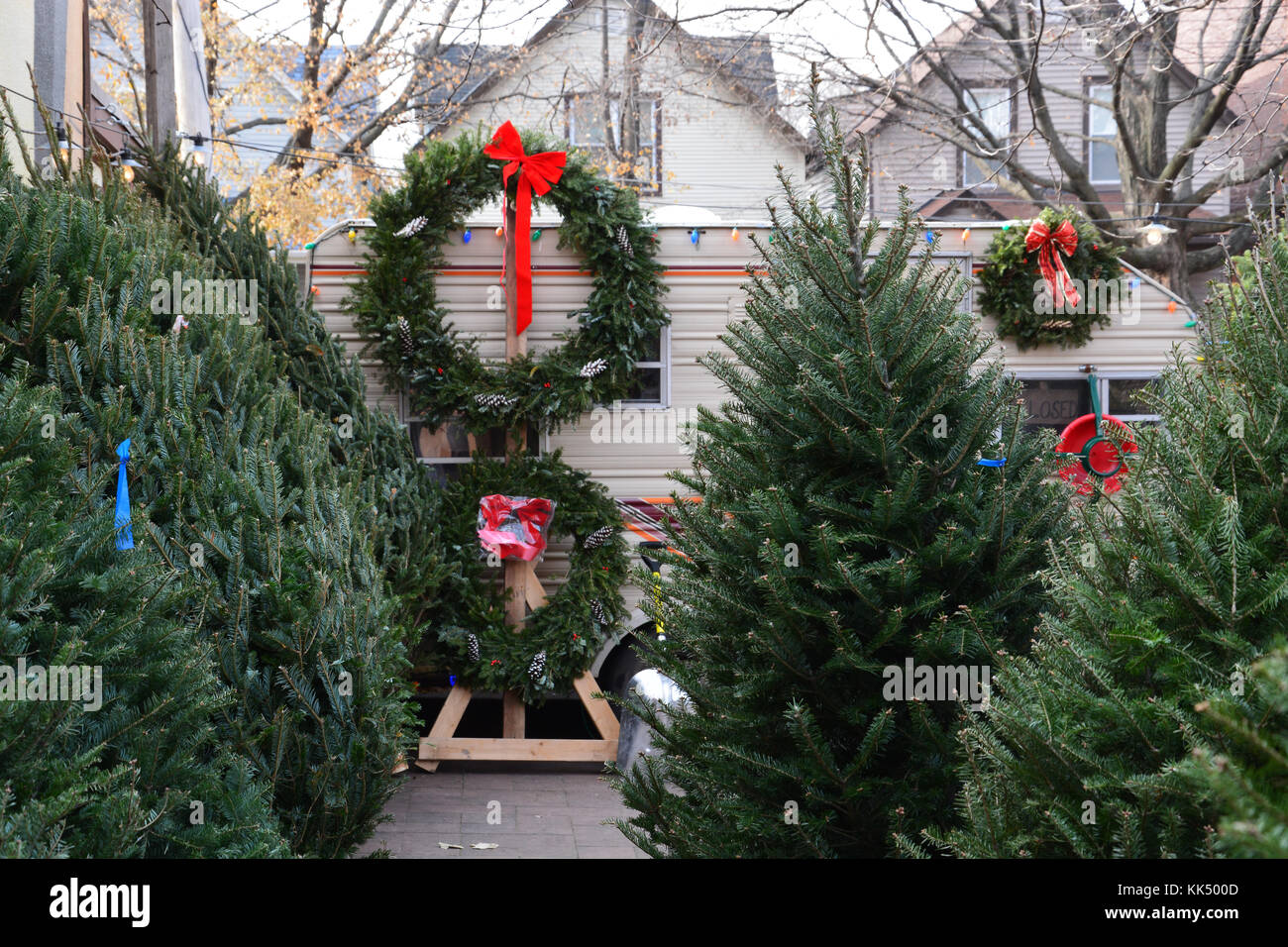 lincoln squares small neighborhood christmas tree lot has been serving the residents of the north side chicago neighborhood for many years