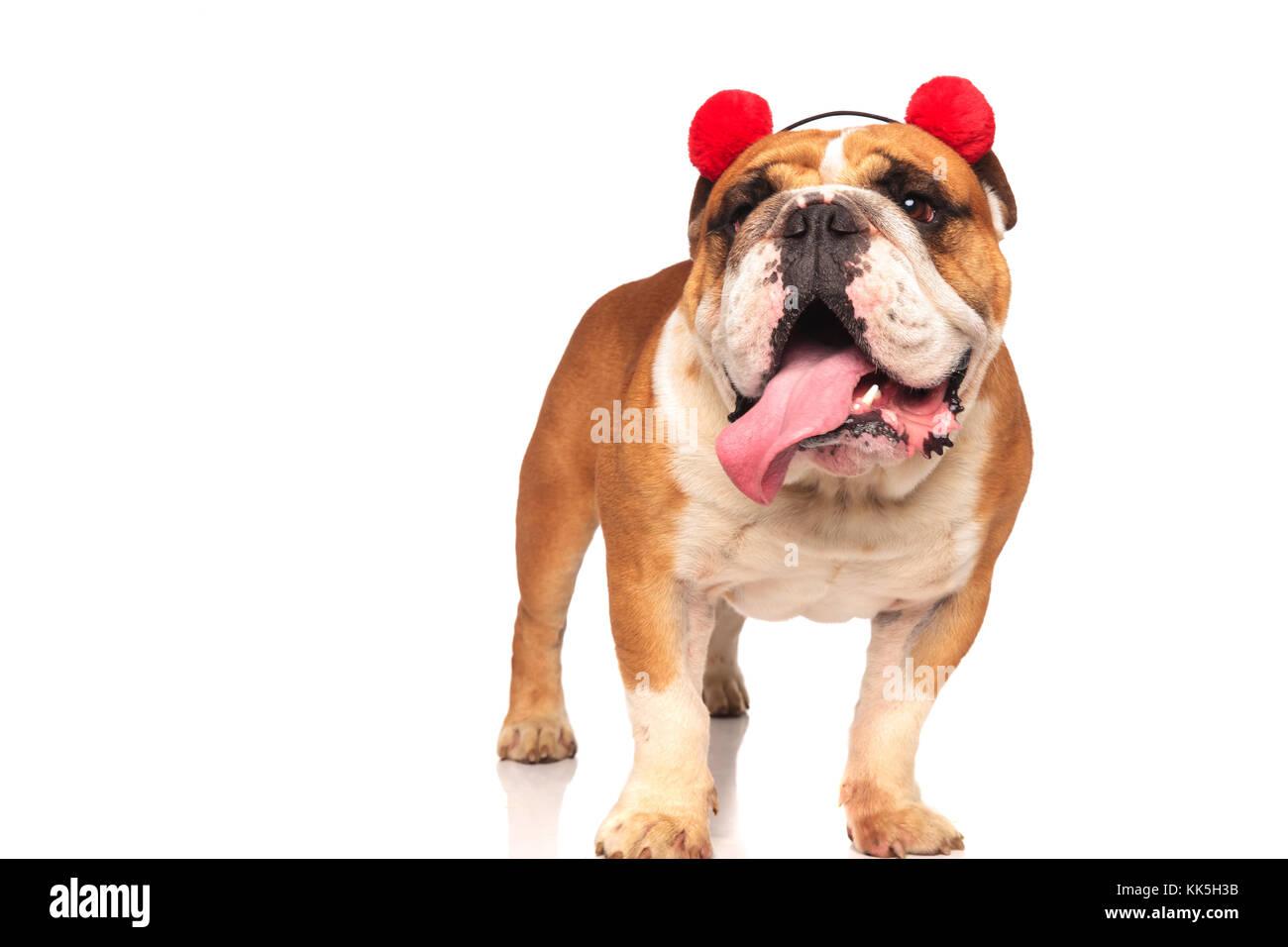 Colorful English Bulldog Anatomy Pattern - Physiology Of Human Body ...