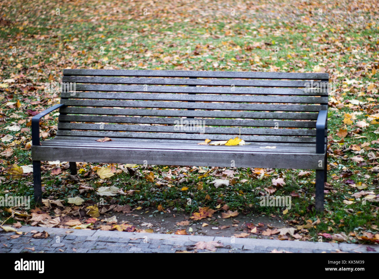 empty bench on an autumn scenery park with yellow leaves on the ground - Stock Image