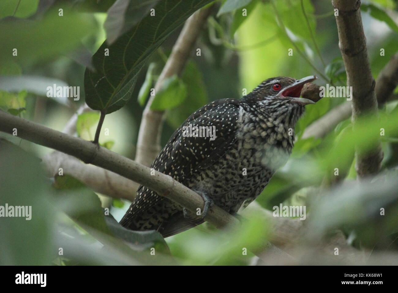 Bird Life - Stock Image