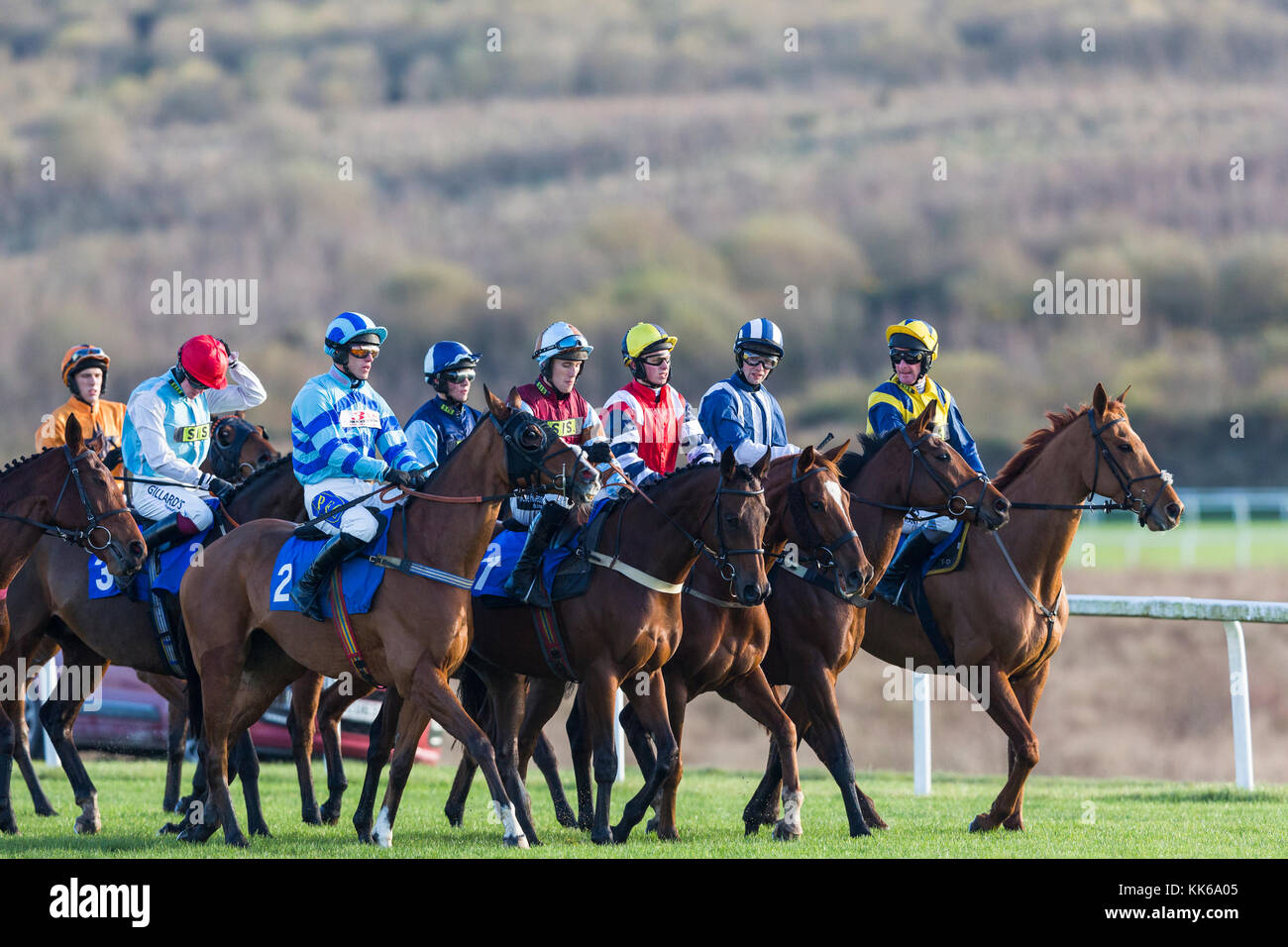 Racehorses and jockeys at Ffos Las before a race - Stock Image