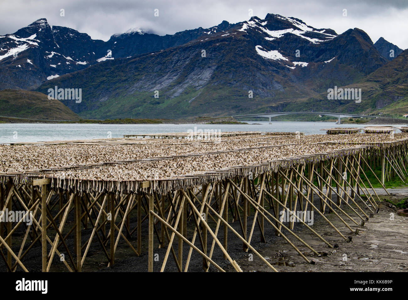 Artic cod drying on wooden racks besides a fjord in the Lofoten Islands, Norway, Europe Stock Photo