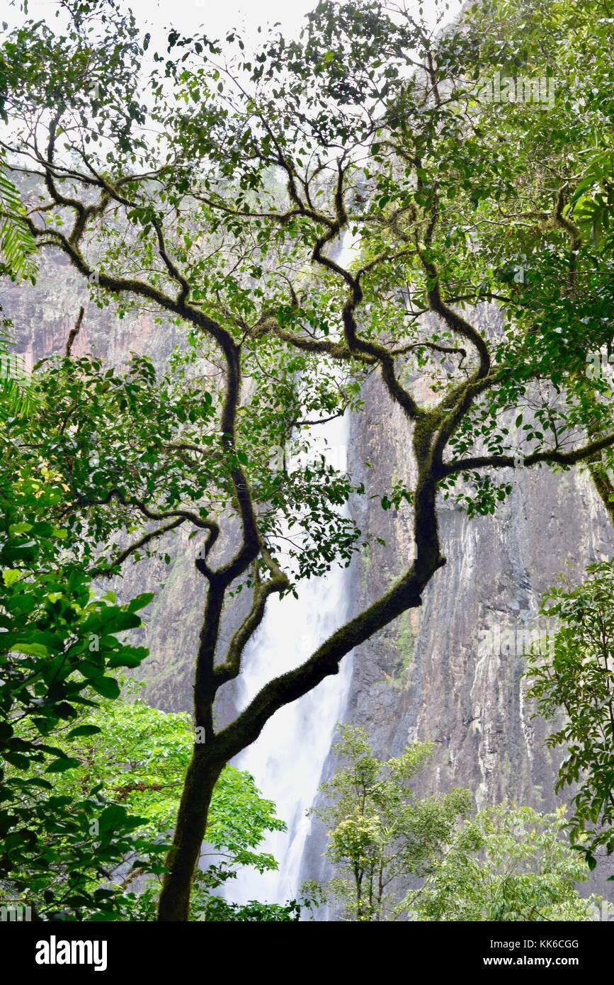 Wallaman Falls in Girringun National Park, Queensland, Australia - Stock Image