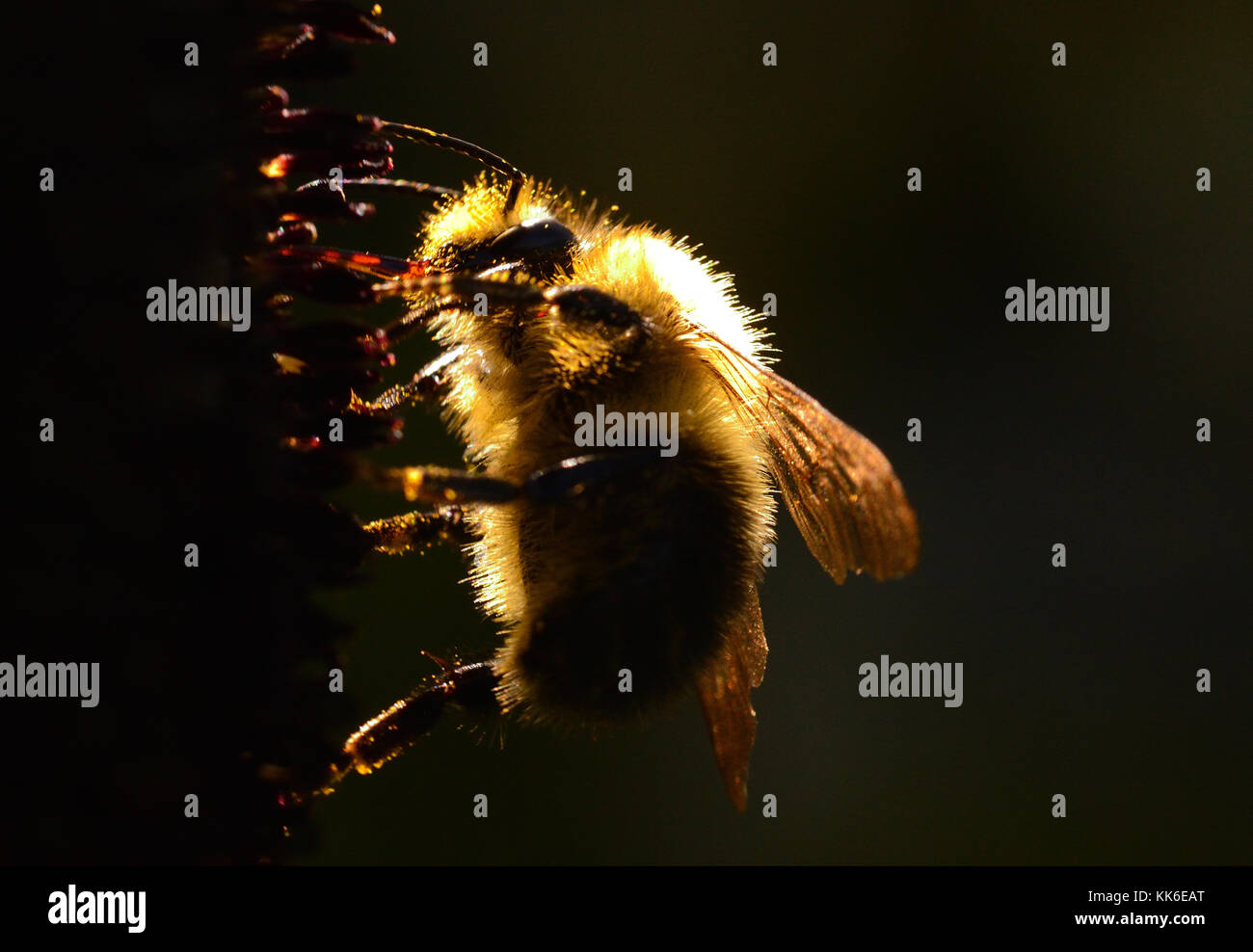 Bees - Stock Image