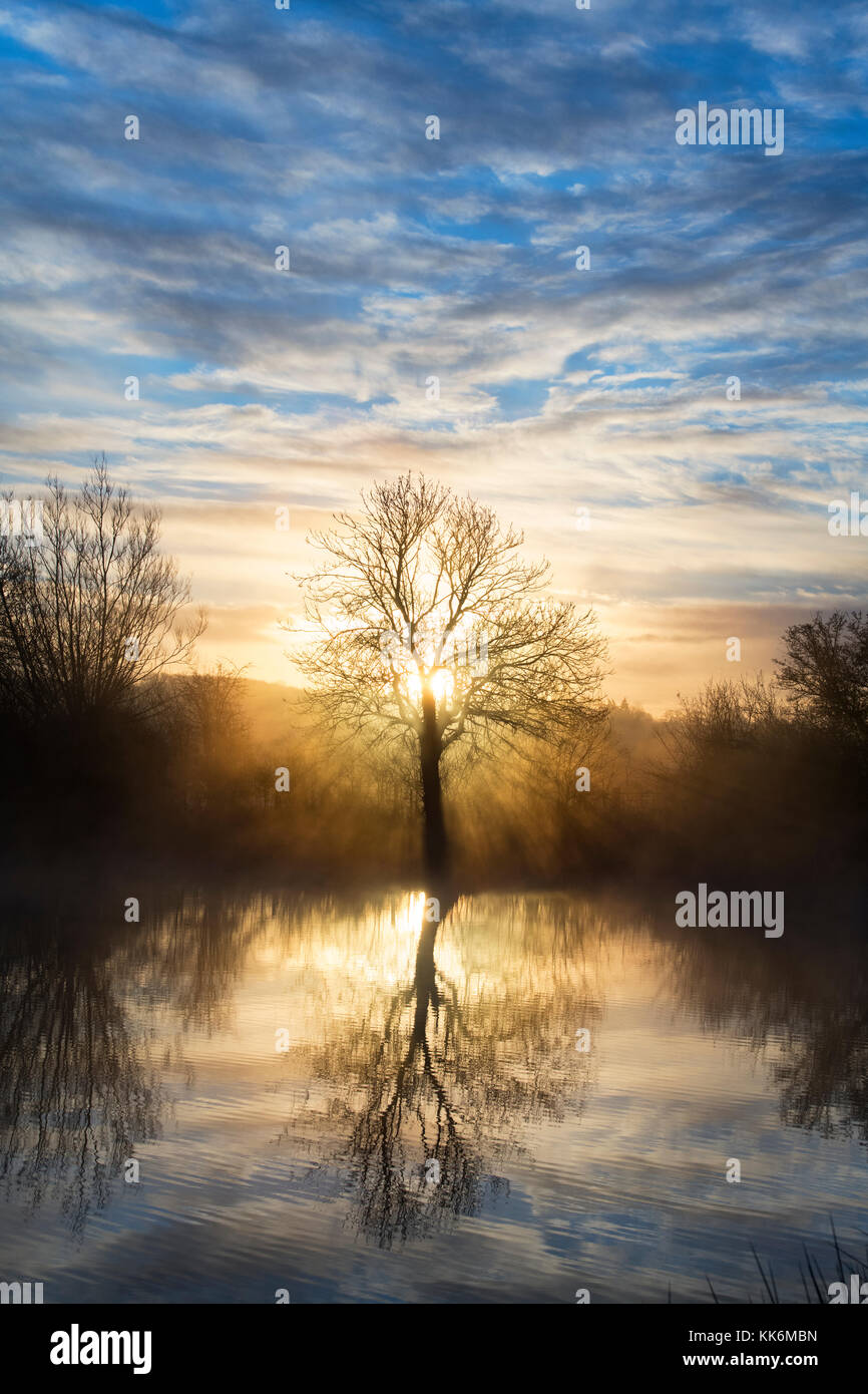 Sunrise mist and tree reflections over lakes in the village of Bourton on the Water. Cotswolds, Gloucestershire, - Stock Image