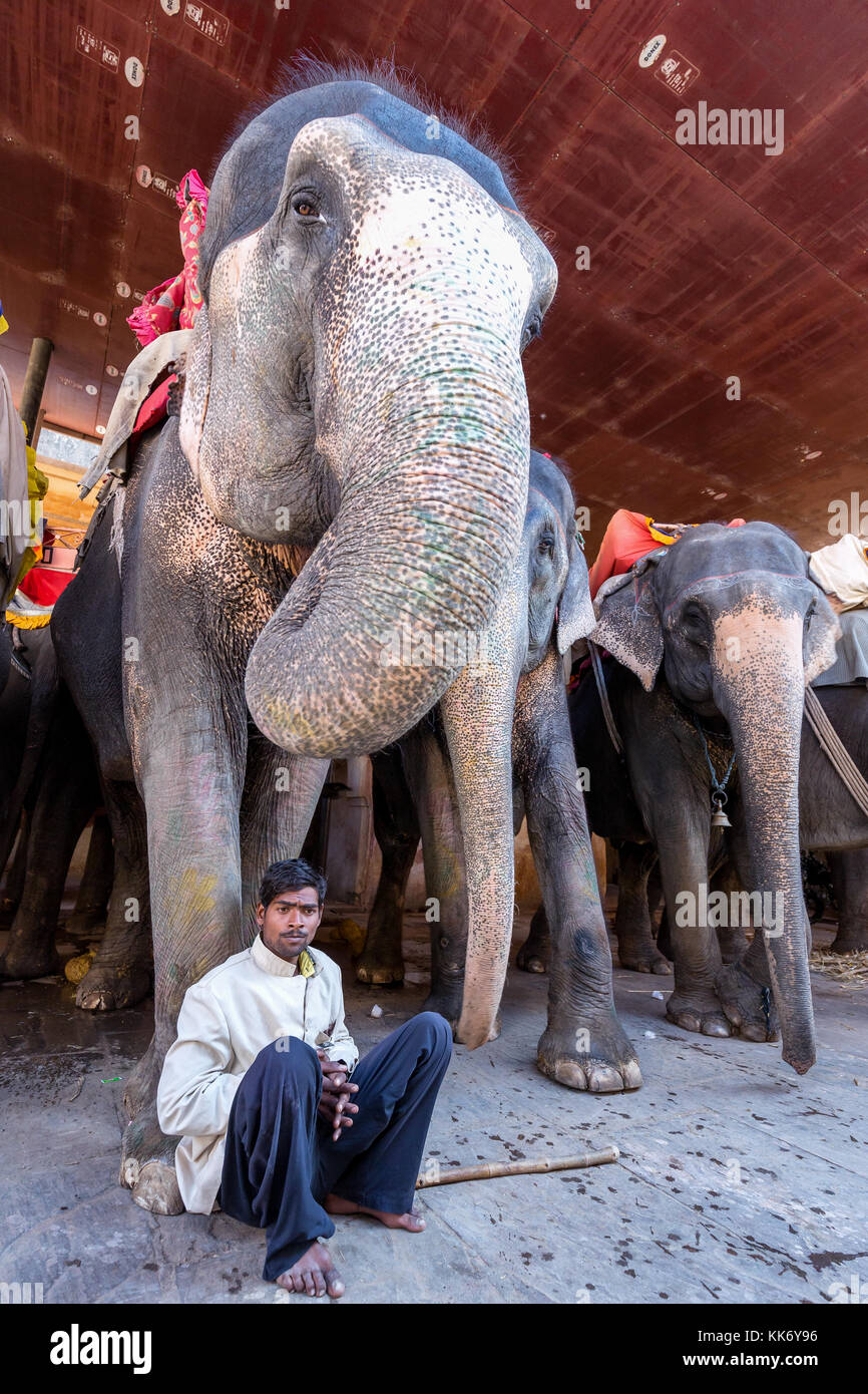 A mahout taking a rest in front of his elephant, Amber Fort, Jaipur, Rajasthan, India - Stock Image