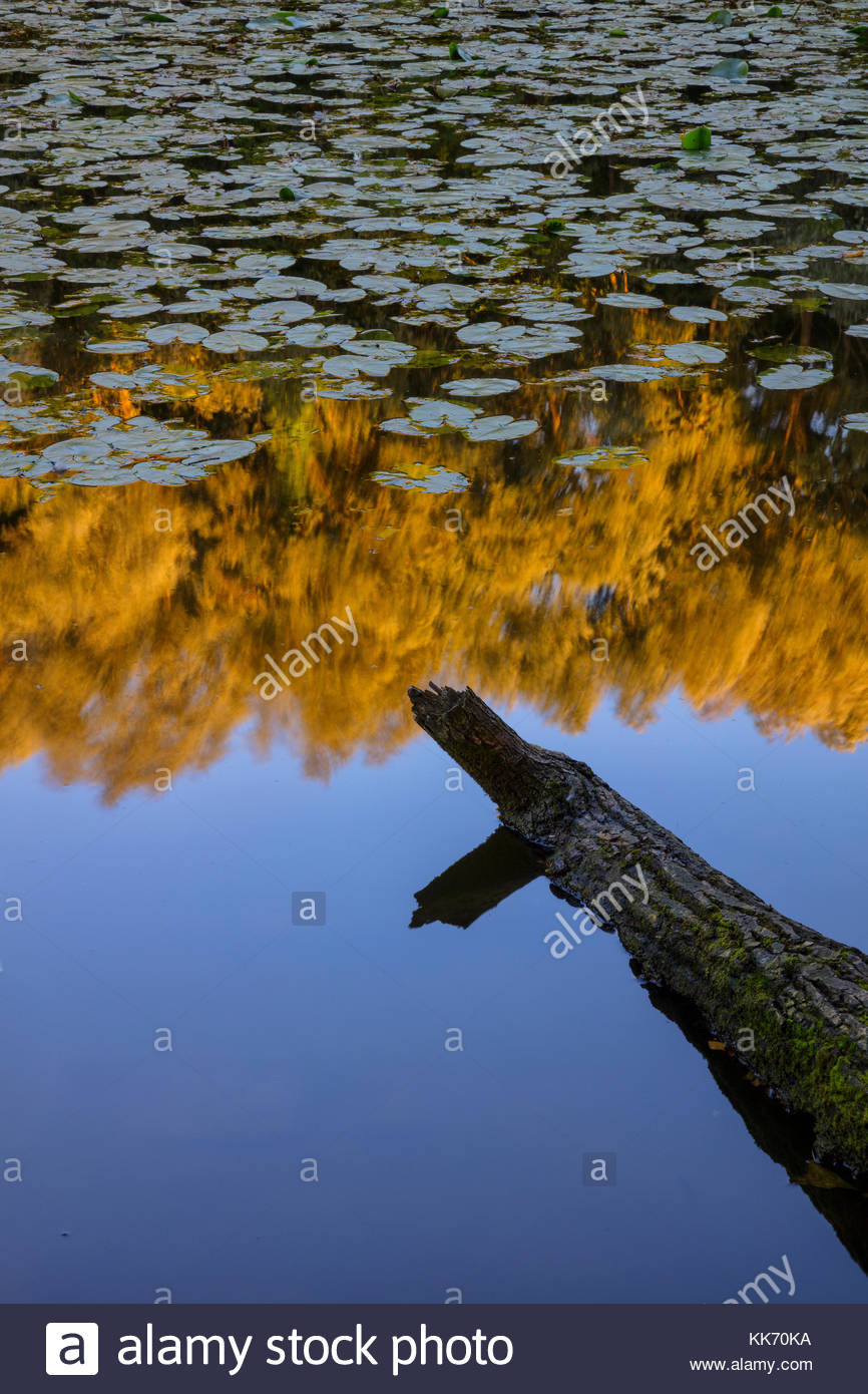 A log points toward the reflection of a forested area on a large pond, partially covered in lily pads, in Parc des - Stock Image