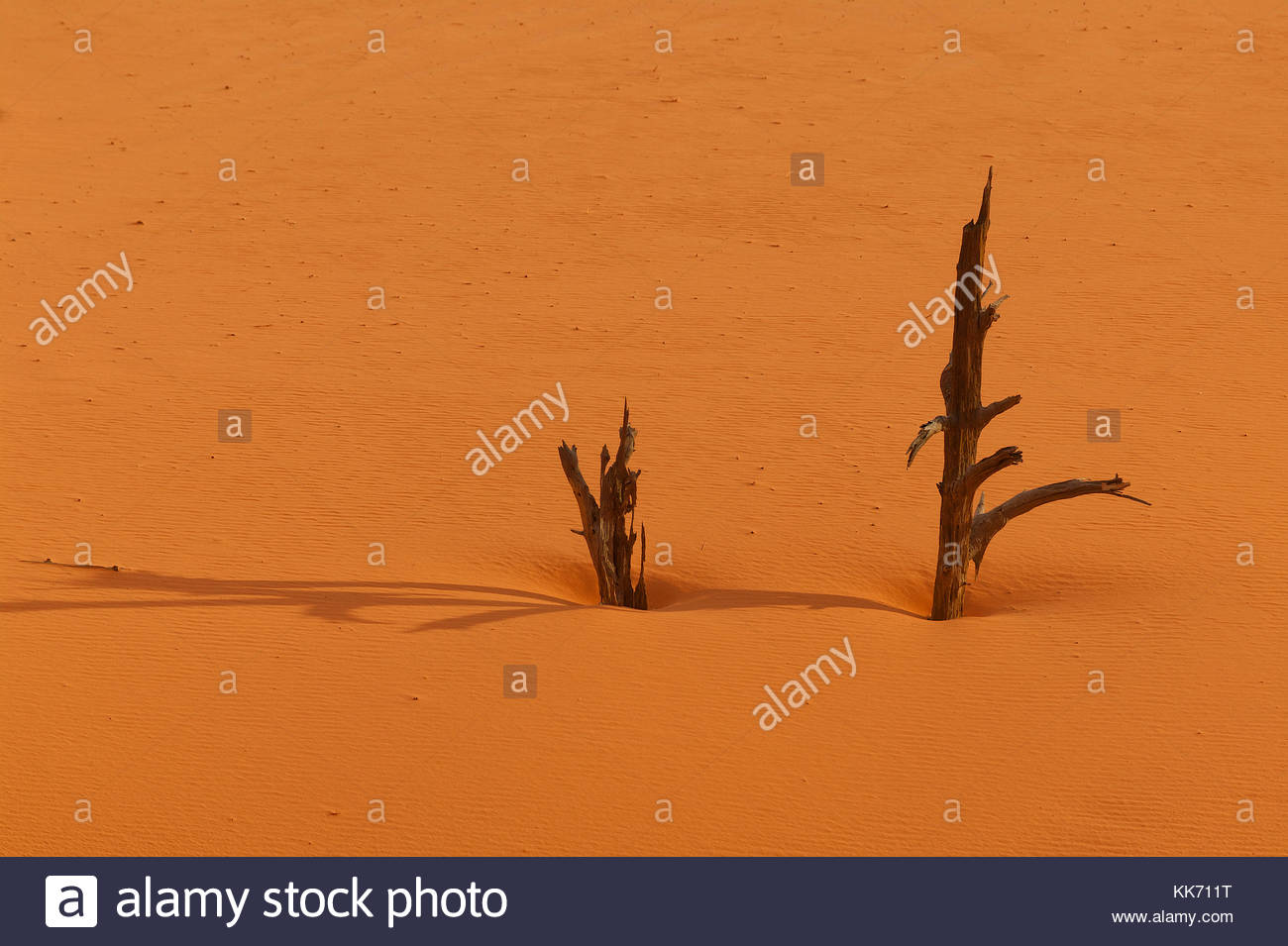 Remnants of two snags poke out from and cast shadows on the orange-pink sand of the Coral Pink Sand Dunes near Kanab, - Stock Image