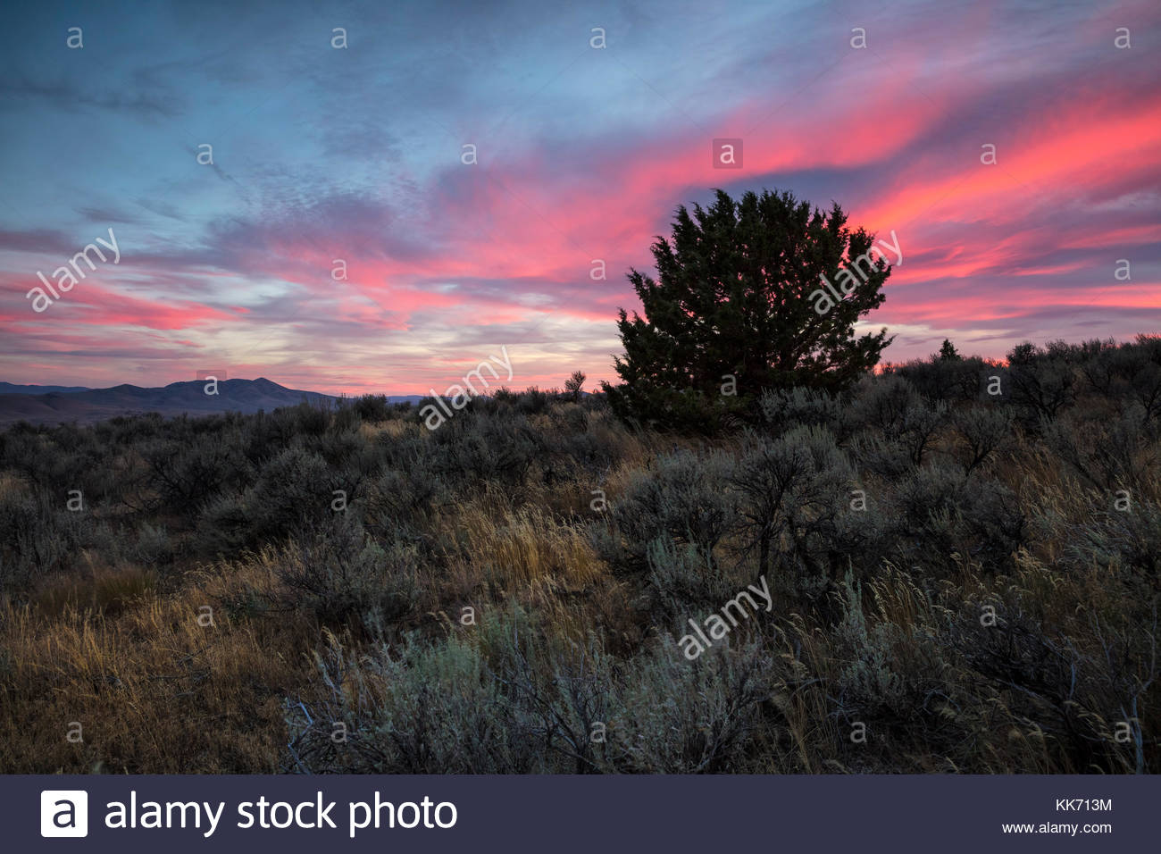 A band of altostratus clouds reflect the red color of sunset over the Mormon Basin in Malheur County, Oregon. Cow - Stock Image