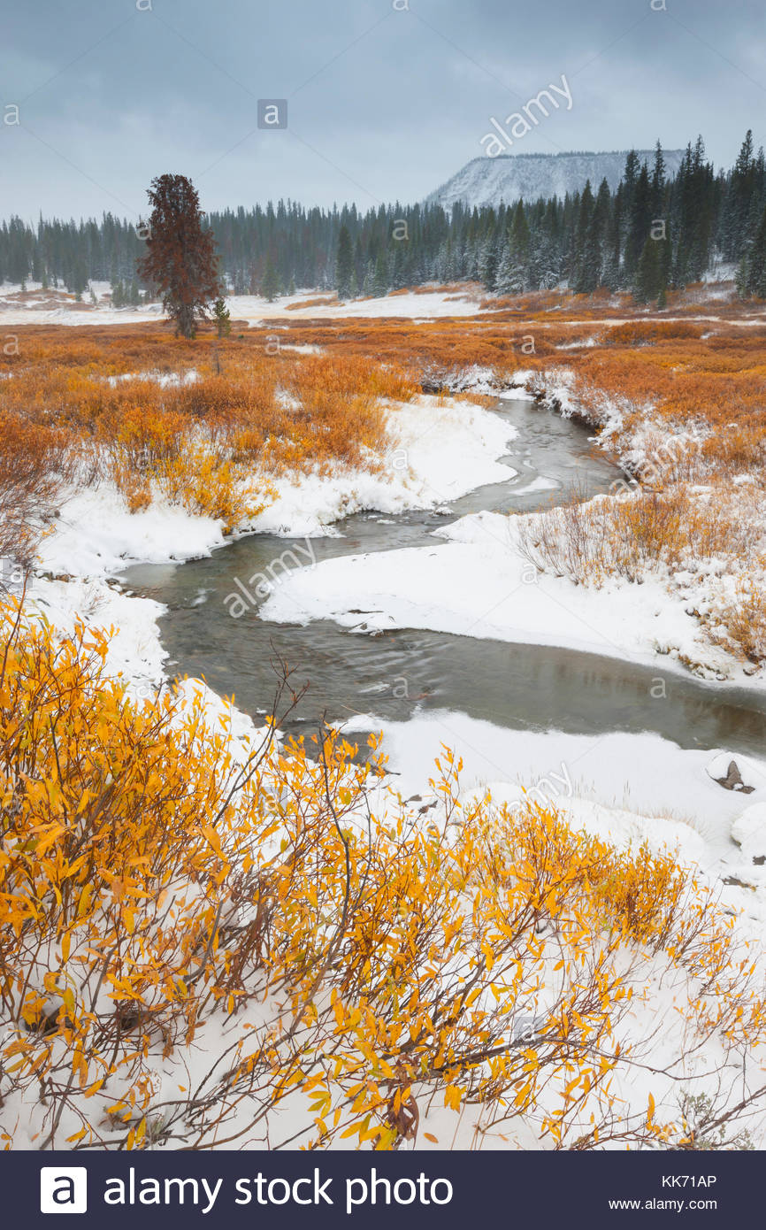 Golden fall color lines the snow-covered banks of Blackrock Creek after the first autumn snowfall in Teton County, - Stock Image