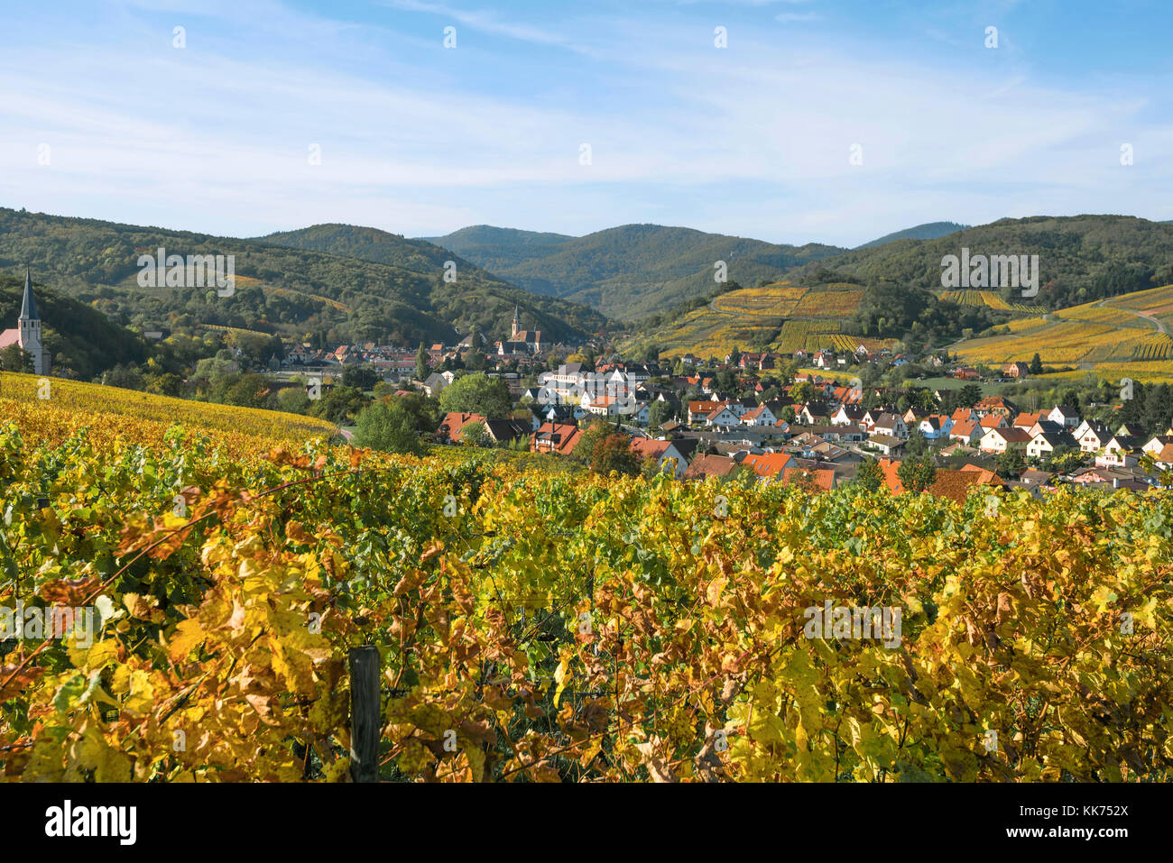 village Andlau embedded between vineyards in beautiful autumn colours, foothills of the Vosges Mountains, on the - Stock Image