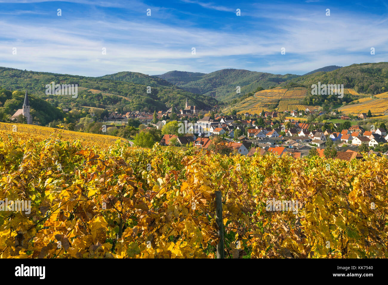 village Andlau and the surrounding vineyards in beautiful autumn colours, foothills of the Vosges Mountains, on - Stock Image