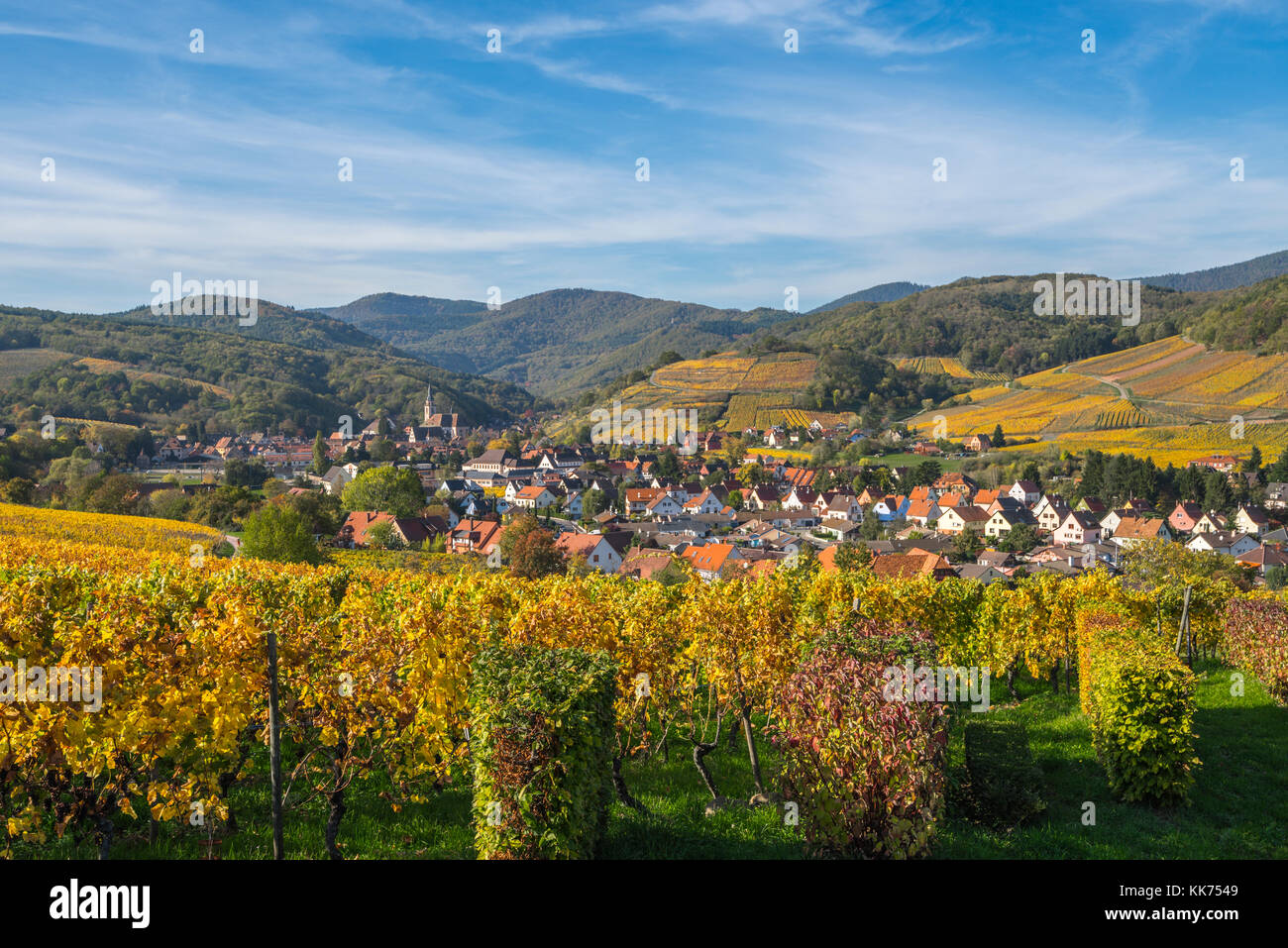 village Andlau embedded between surrounding vineyards in autumn colours, foothills of the Vosges Mountains, on the - Stock Image