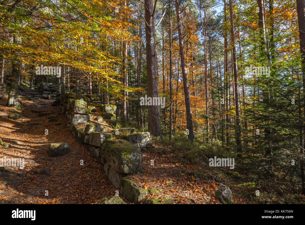 The Pagan Wall, Celtic wall around Mont Sainte-Odile, in German Odilienberg, peak in the Vosges Mountains, Alsace, - Stock Image