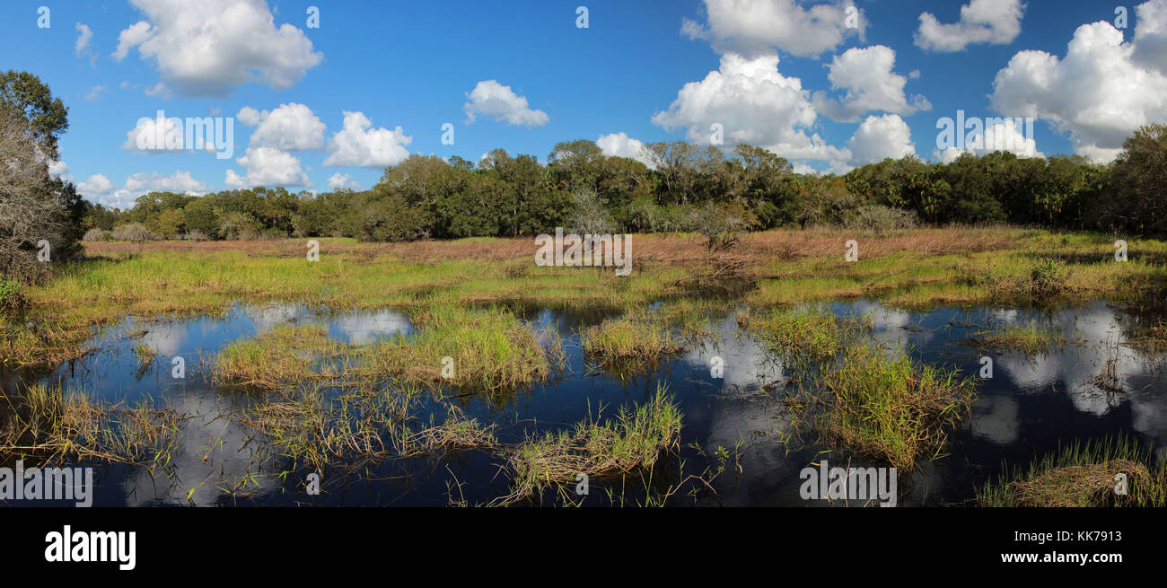 Panoramic landscape of a Florida wetlands with water reflections of the clouds taken at Myakka River State Park - Stock Image