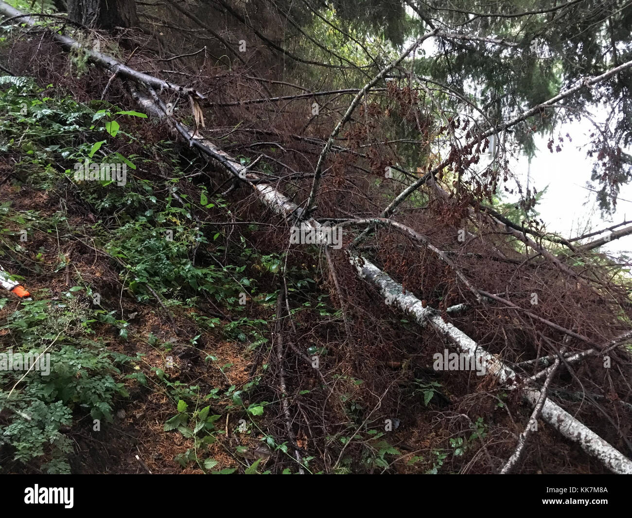 Woodinville Stock Photos & Woodinville Stock Images - Alamy