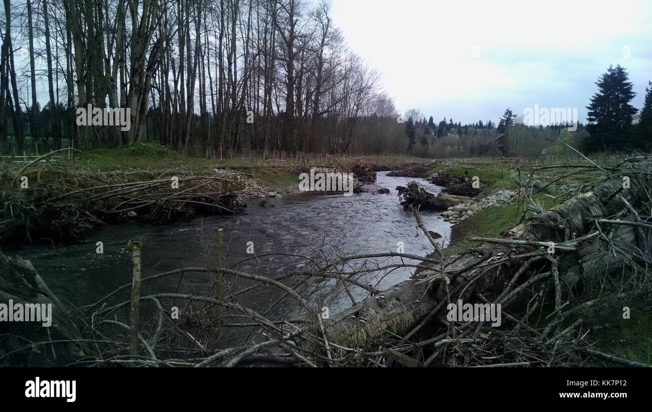 WSDOT worked with the City of Redmond to improve salmon