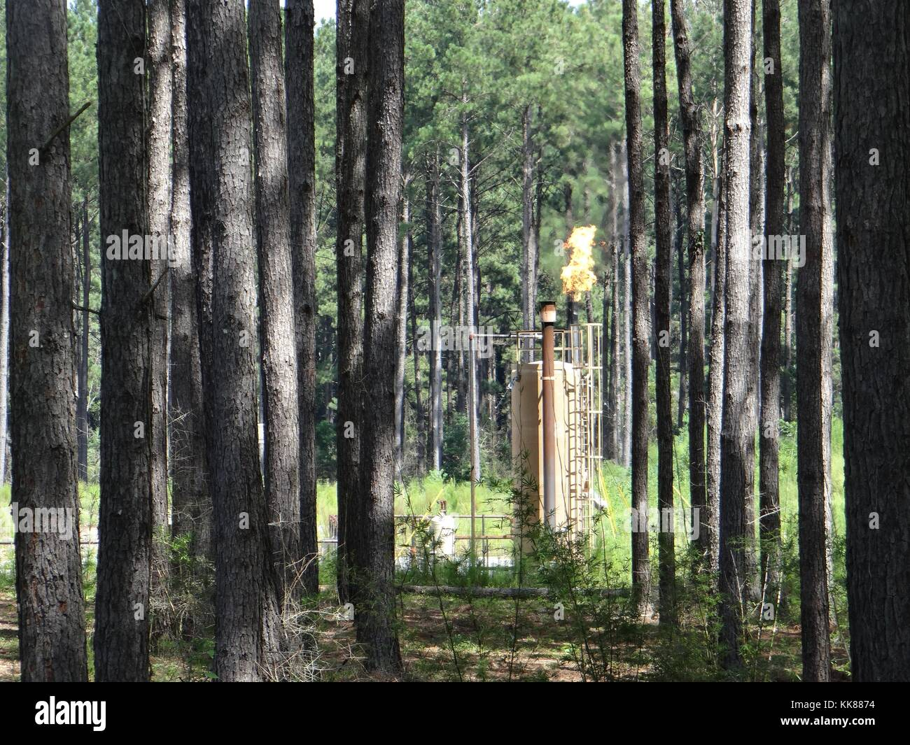 Wellpad in the Tuscaloosa Marine Shale in Liberty, Missouri, showing natural gas flare among trees. Sometimes, often - Stock Image