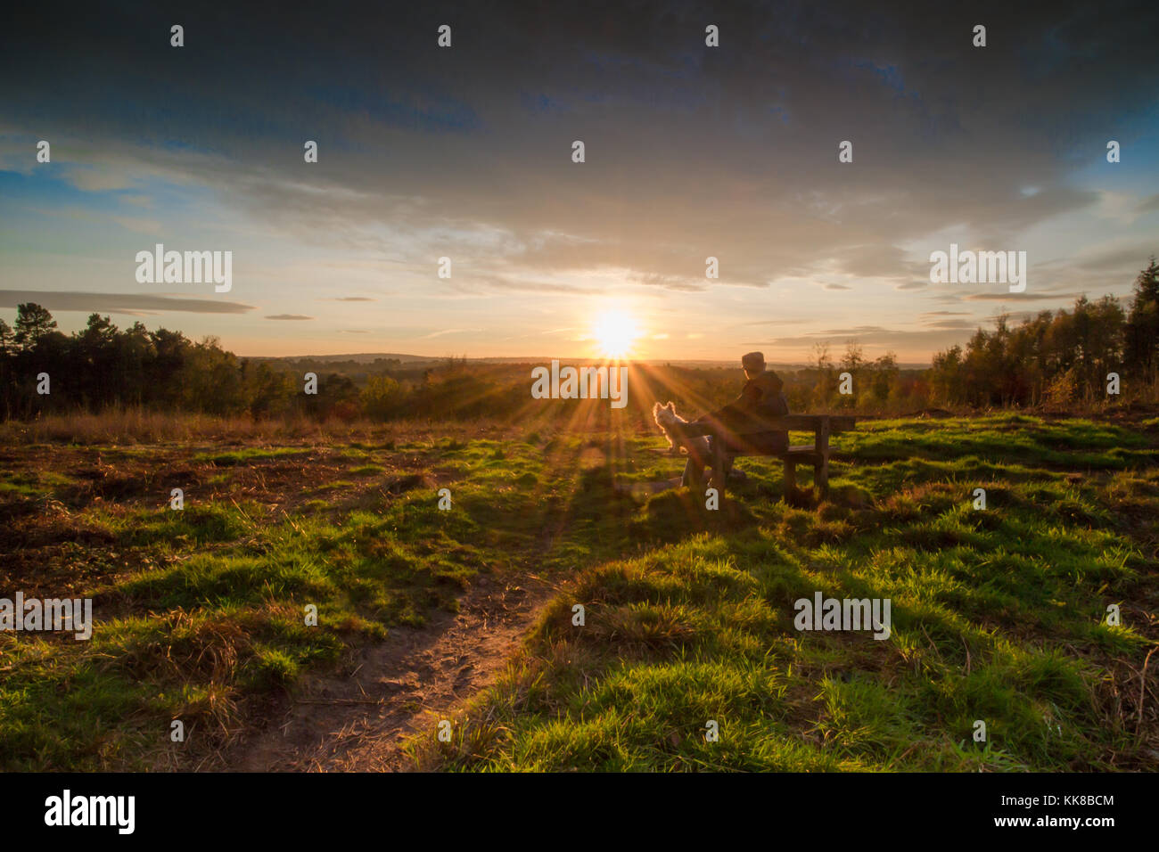 Tunbridge Wells Hargate Forest Kent; man with cap on sitting on bench with Westie dog looking across the heather - Stock Image