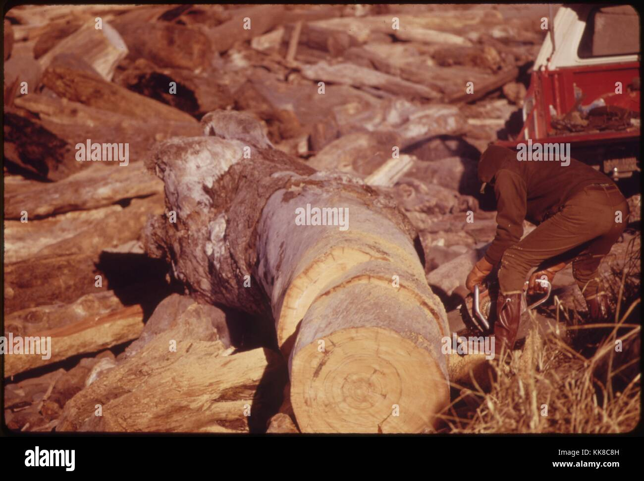 Sawing and Splitting of Logs Tossed on the Beach near Lincoln City, Was Done to Conserve Electricity and Find a - Stock Image