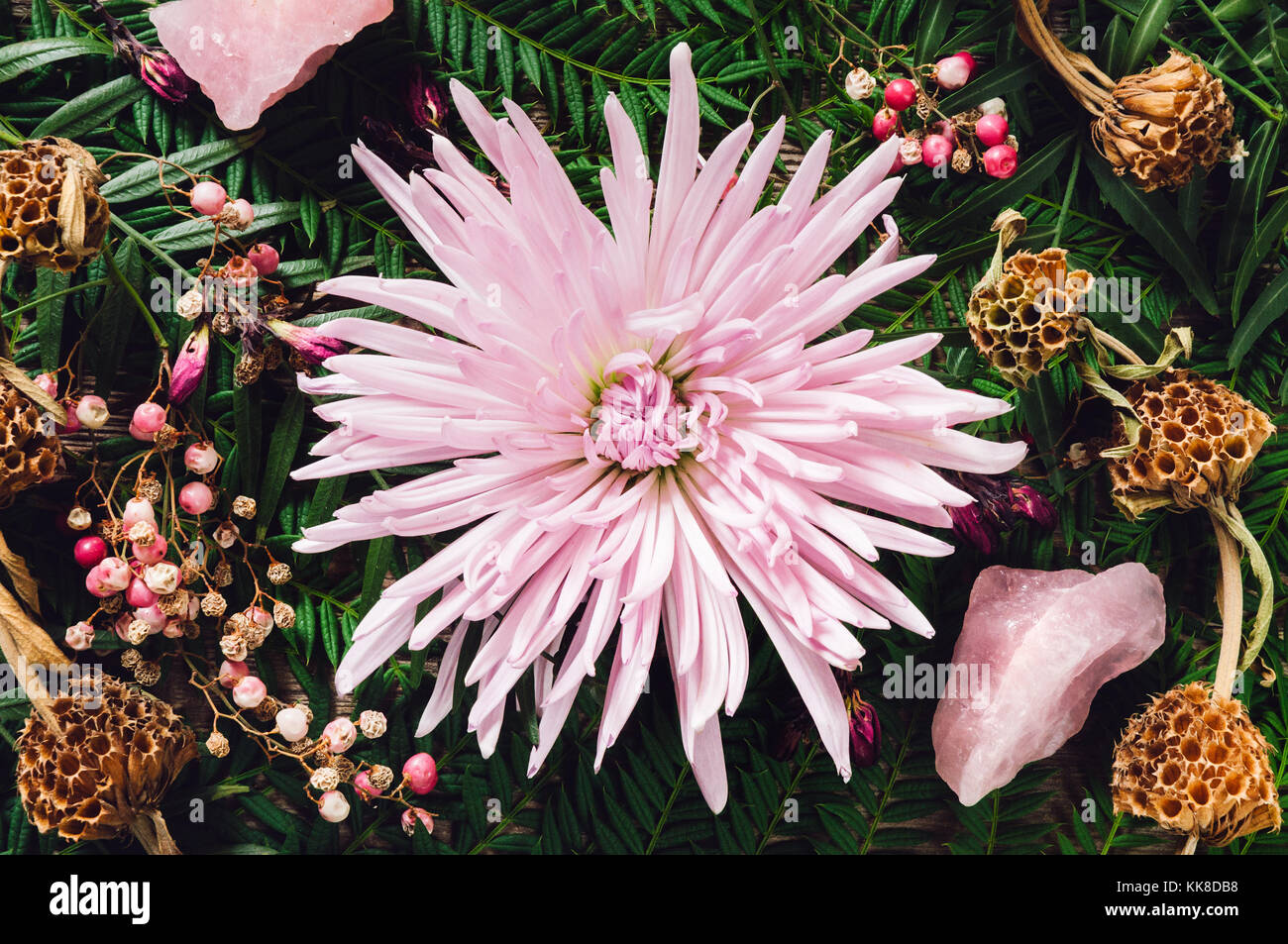 Fuji Spider Mum Flower with Rose Quartz Crystal and Schinus molle Fruits. Stock Photo