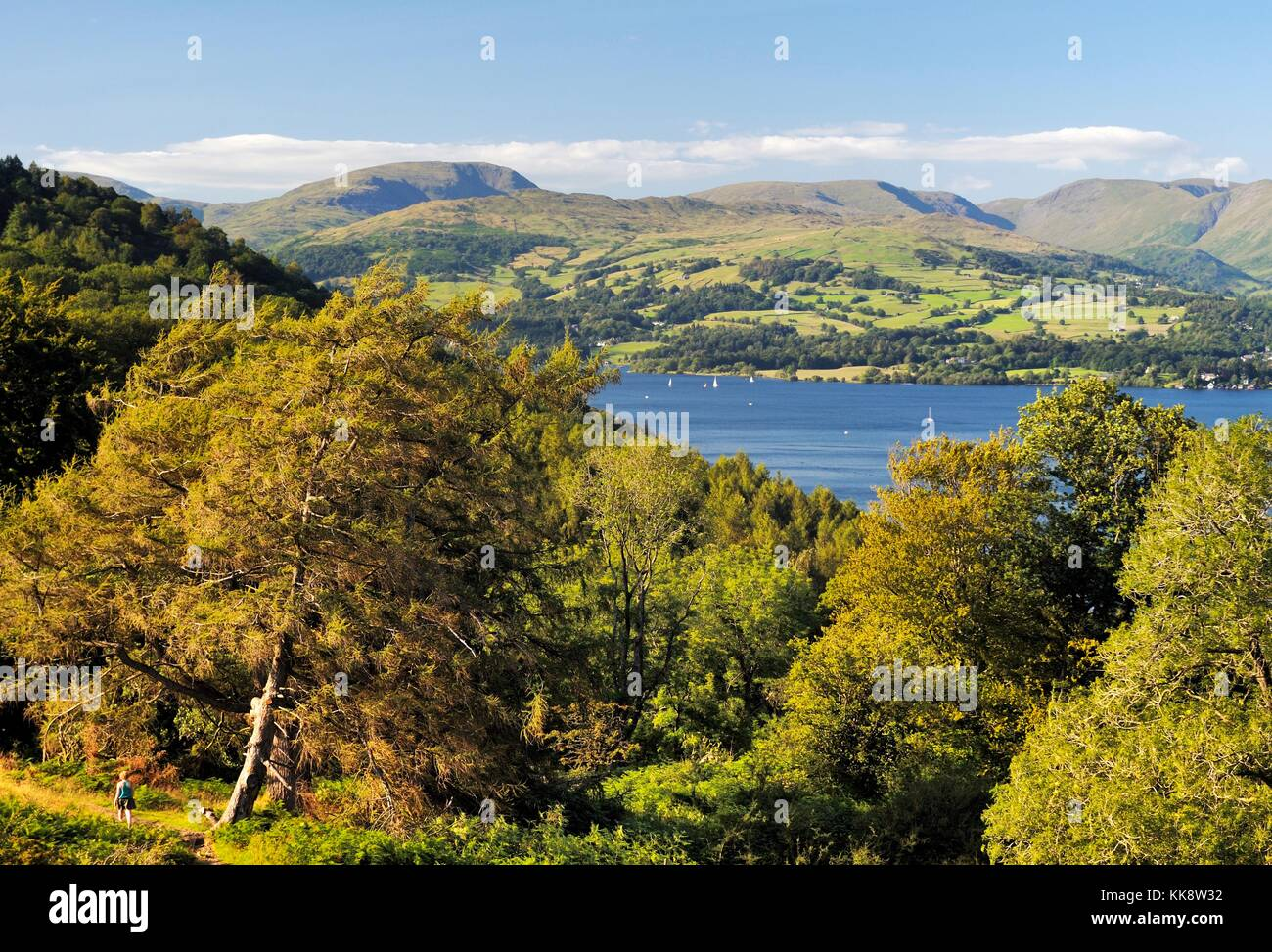 Lake District National Park, Cumbria, England. Looking N. to the Troutbeck fells. Woman walks along woodland path - Stock Image