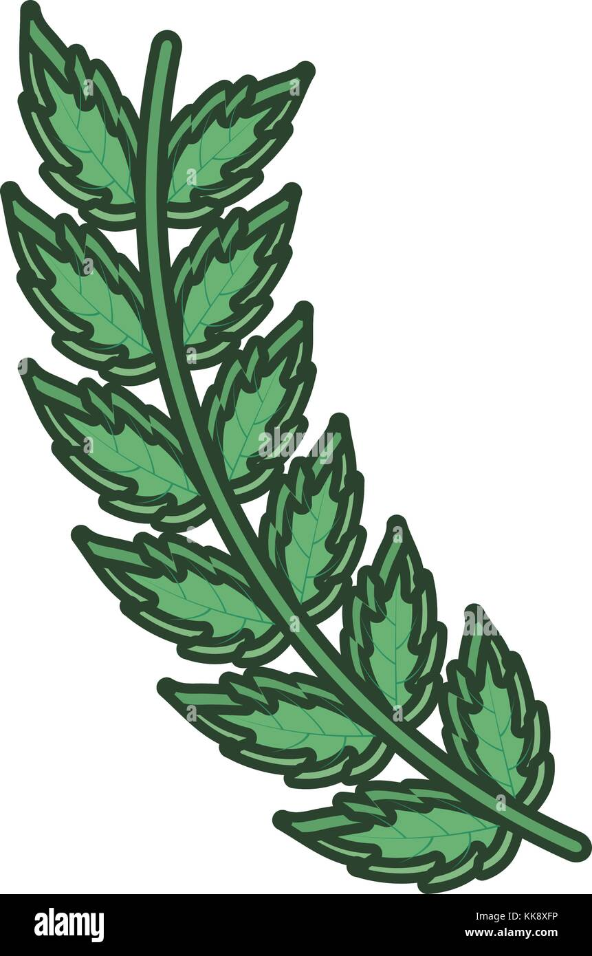 leaves  vector illustration - Stock Image