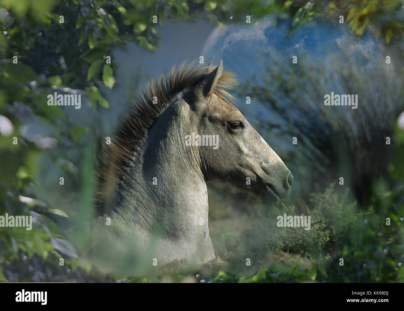 A mystical foal lies down amid ferns and foliage whilst a giant moon emerges behind. - Stock Image