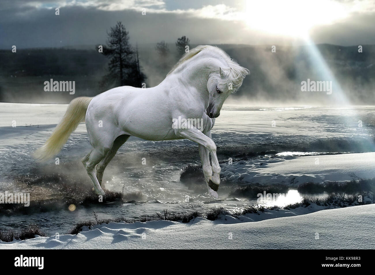 A magical, mystical white horse prancing through the snow and mist over a stream with a shaft of sunlight shining - Stock Image
