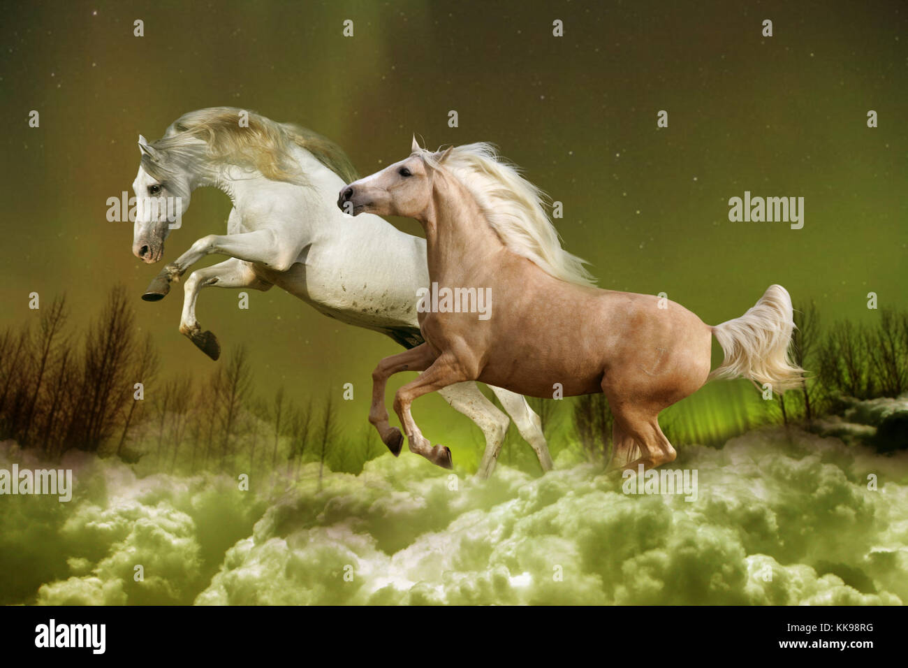 Magical Horses High Resolution Stock Photography And Images Alamy