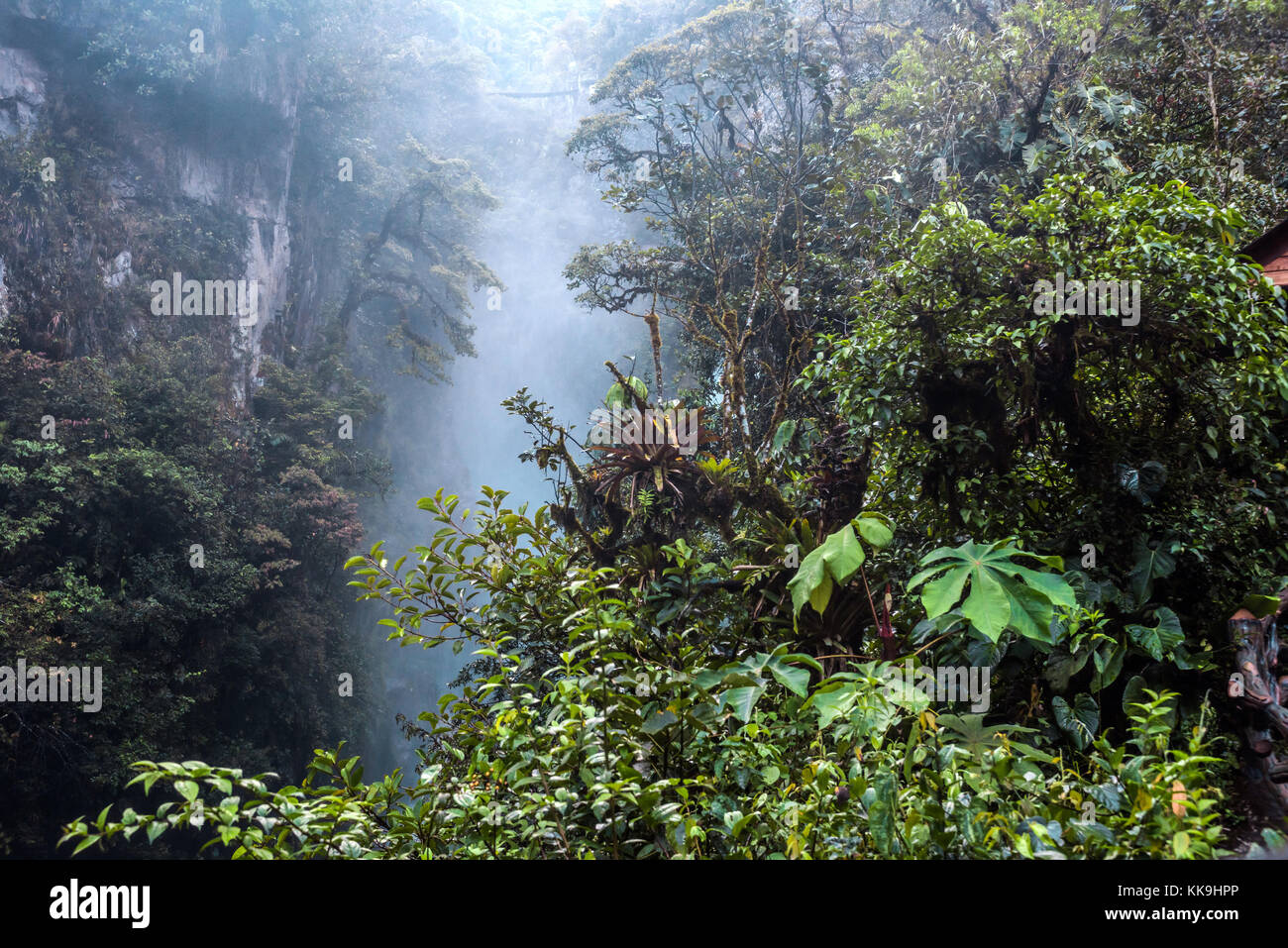 Mountain rainforest, near the waterfall Pailon del Diablo in the Andes. Banos. Ecuador - Stock Image