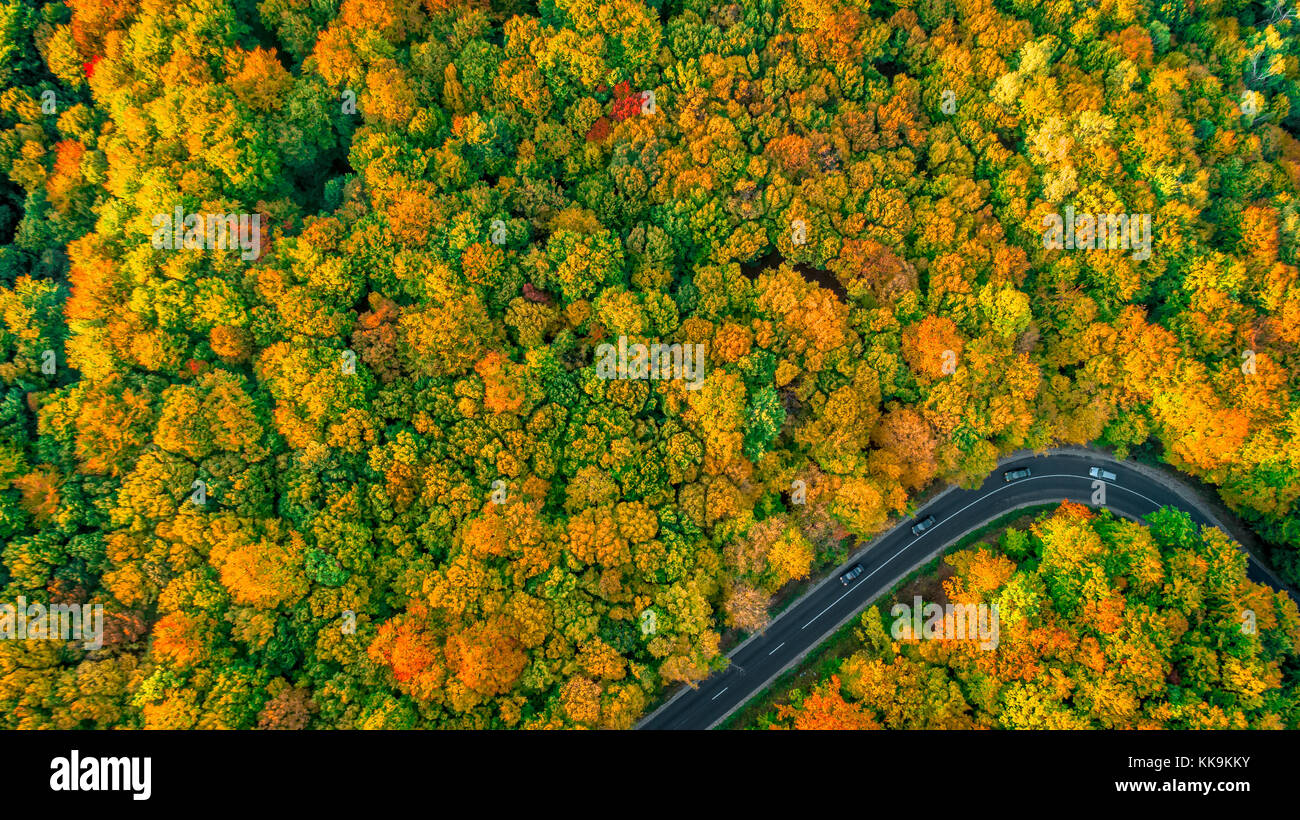 Minimalist aerial view of road in fall colored forest - Stock Image