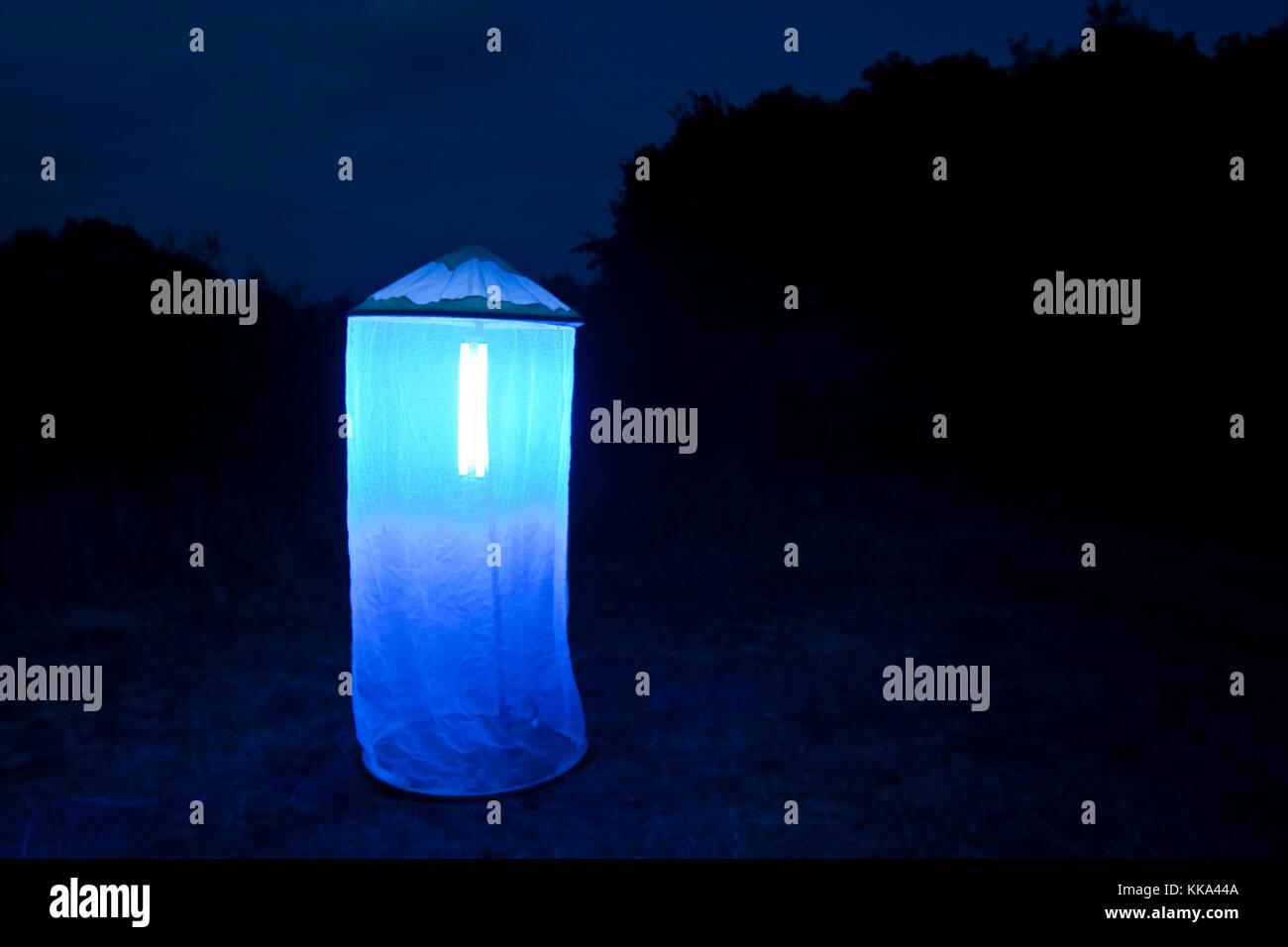 Nachts aufgebautes Leuchtzelt lockt Nacht-Schmetterlinge und andere Insekten an, Leuchten, Kartierung, Untersuchung, - Stock Image