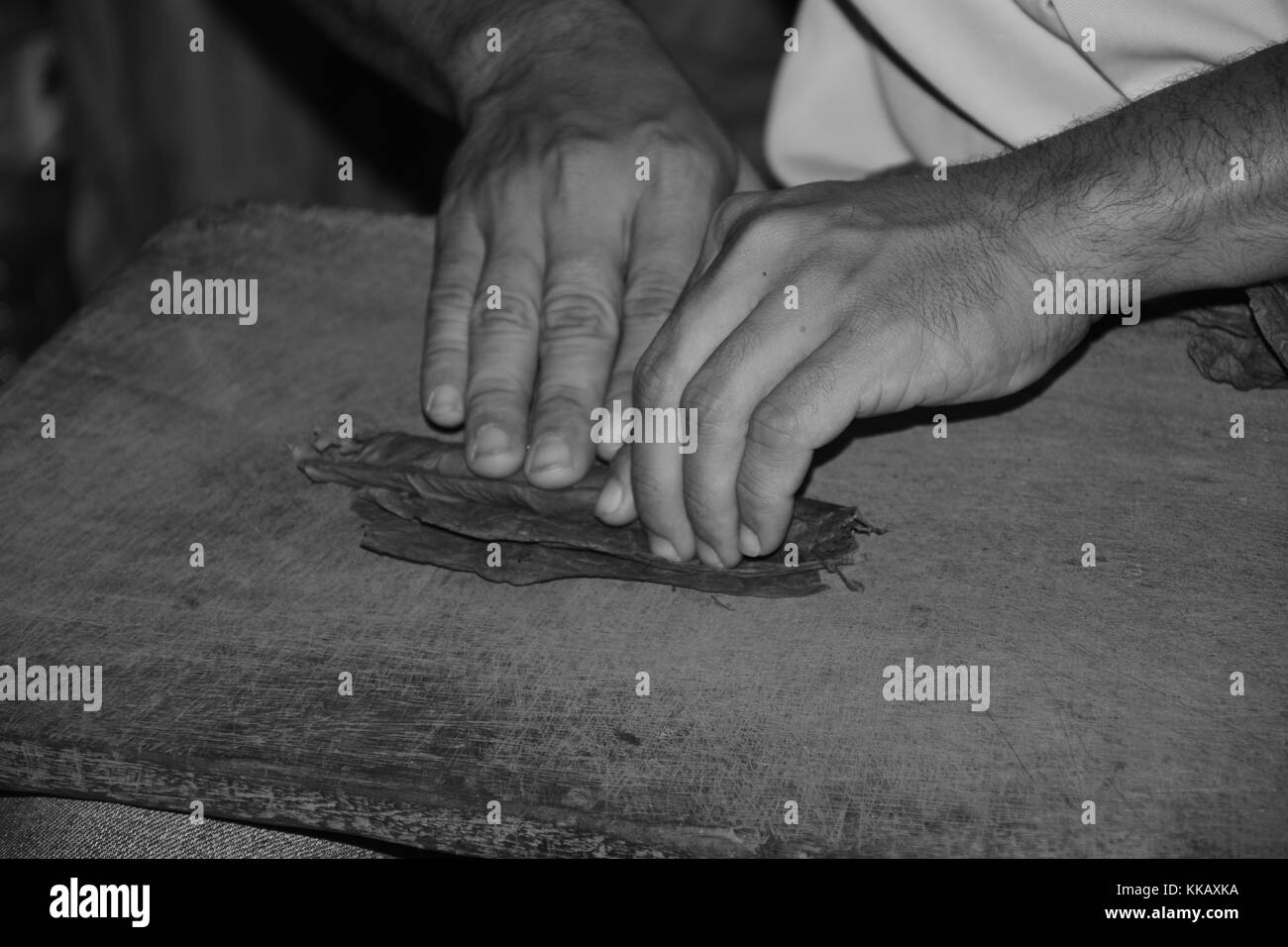 Hand rolling tobacco leaves into a cigar - Stock Image