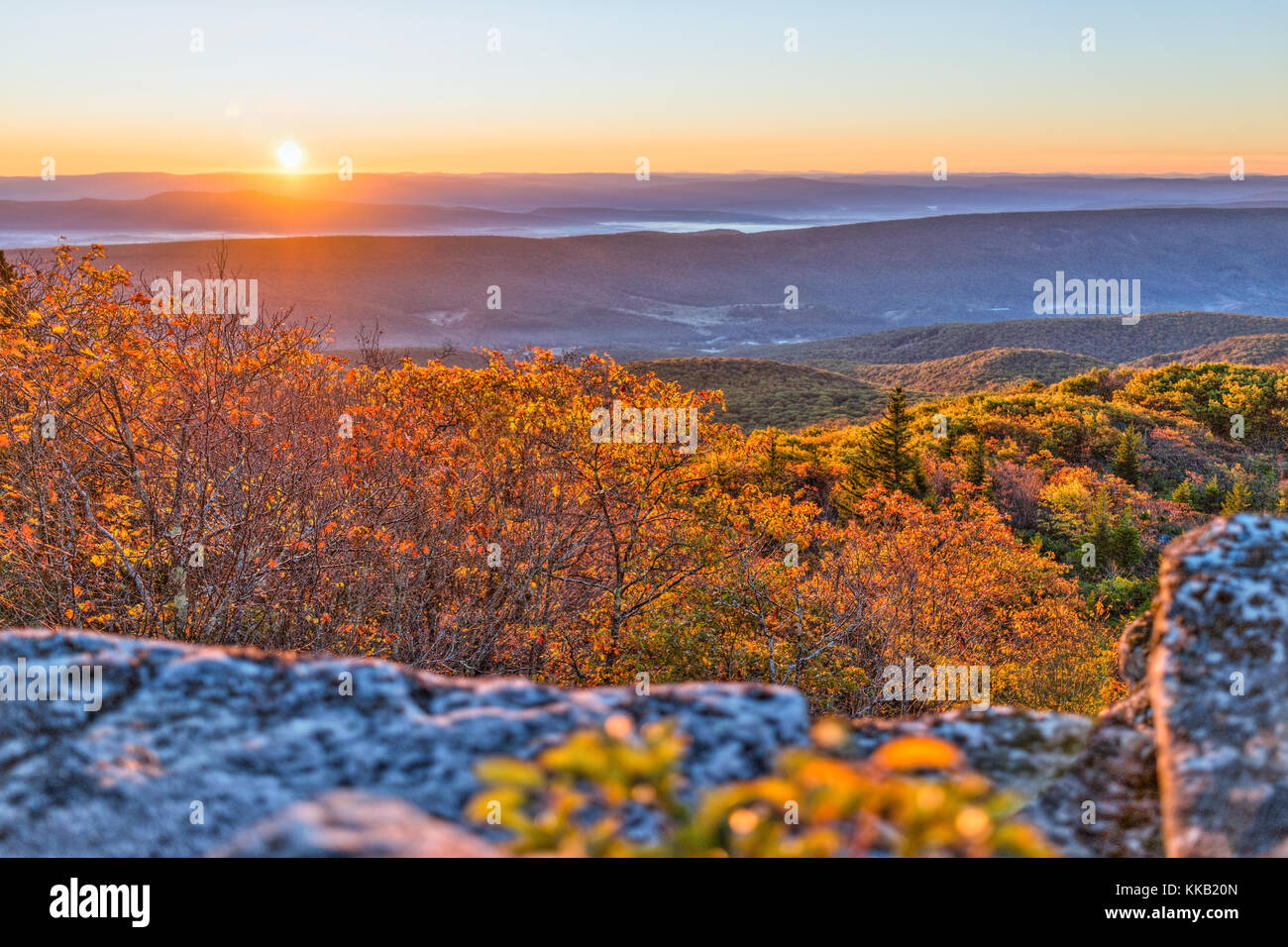 Morning dark sunrise with sky and golden yellow orange autumn foliage in Dolly Sods, Bear Rocks, West Virginia with - Stock Image